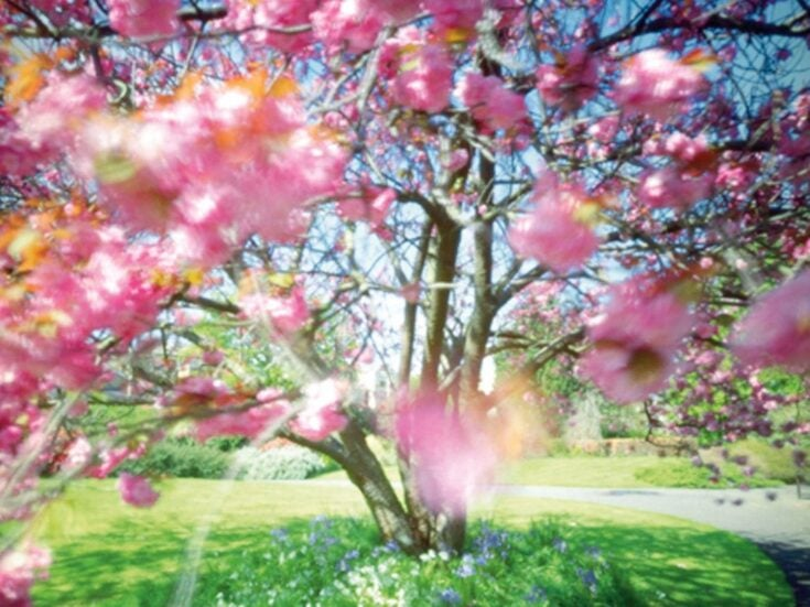 Why I wept at spring's arrival
