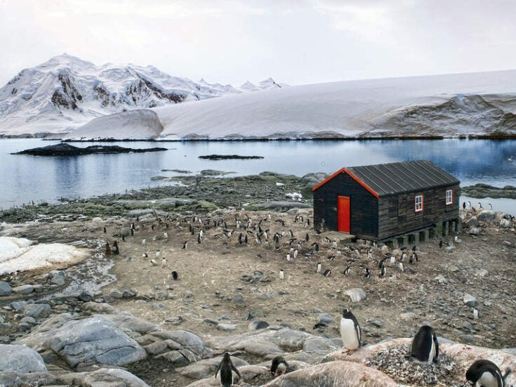 Antarctic life is under threat by increased human activity, study finds