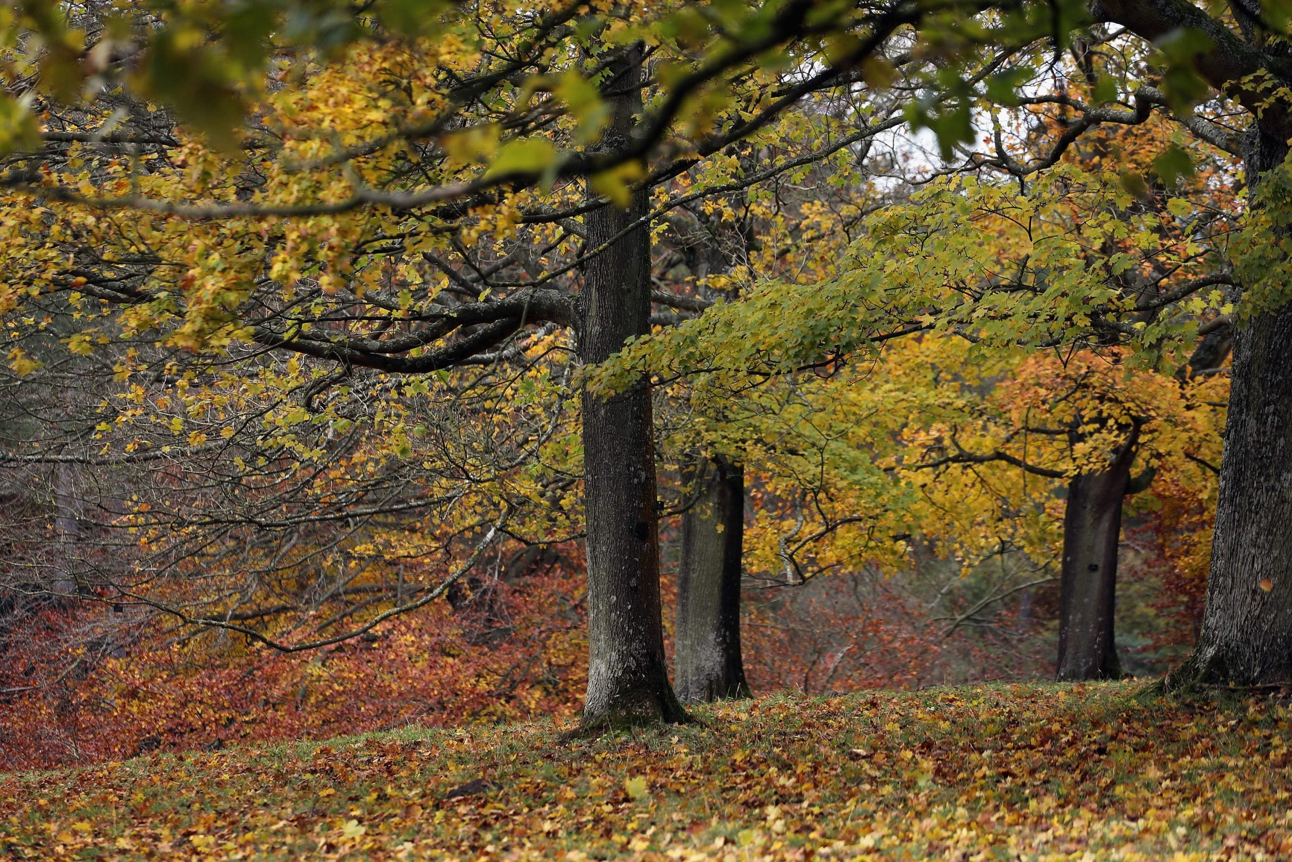 """Finding a better word for """"tree"""": why naming the landscape could be the thing to save it"""