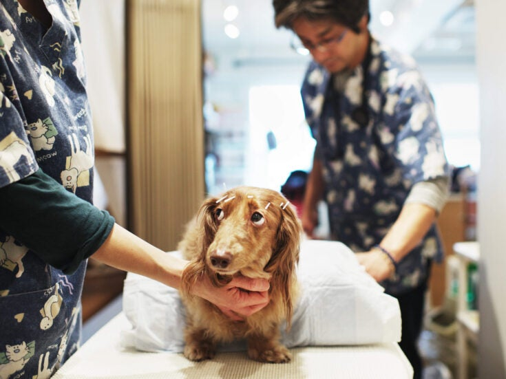 Should you shell out for a dog's MRI scan when there are queues at the local food bank?