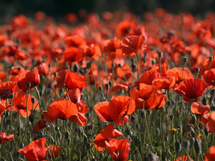 The poppy hijab is just Islamophobia with a floral motif