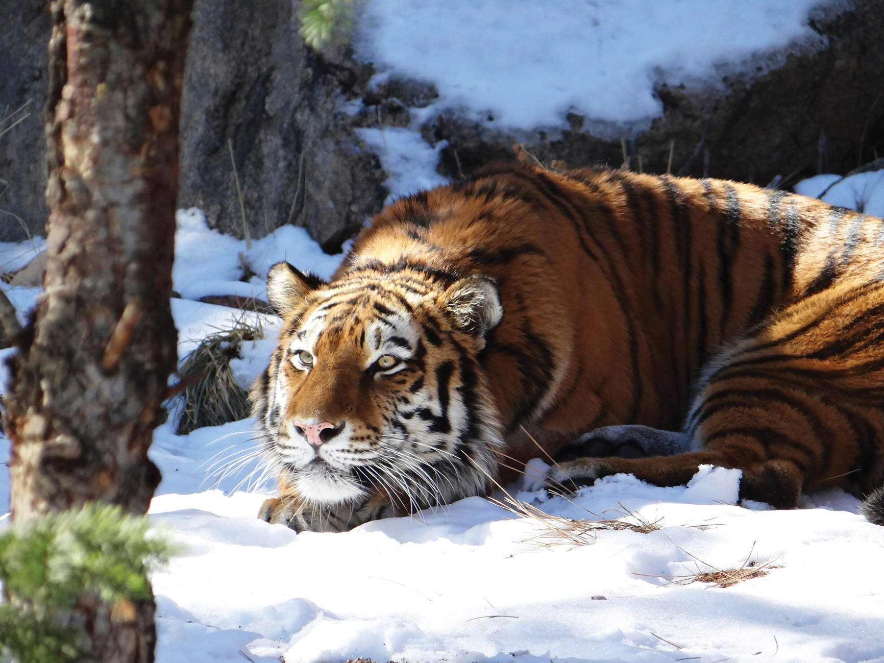 Why Sooyong Park went in search of the Siberian Tiger – and what he found