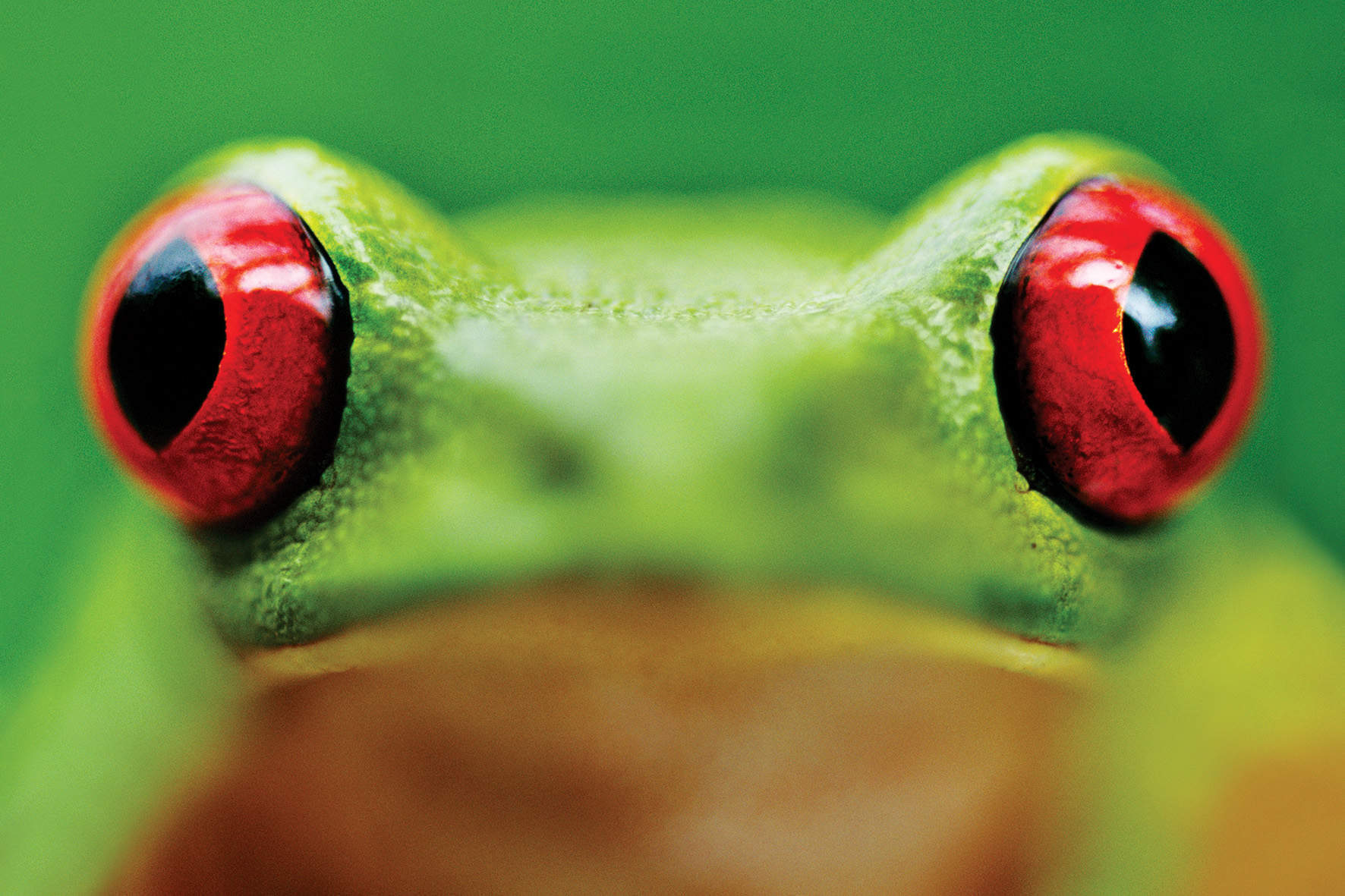 Why dissecting a frog explains nothing about life