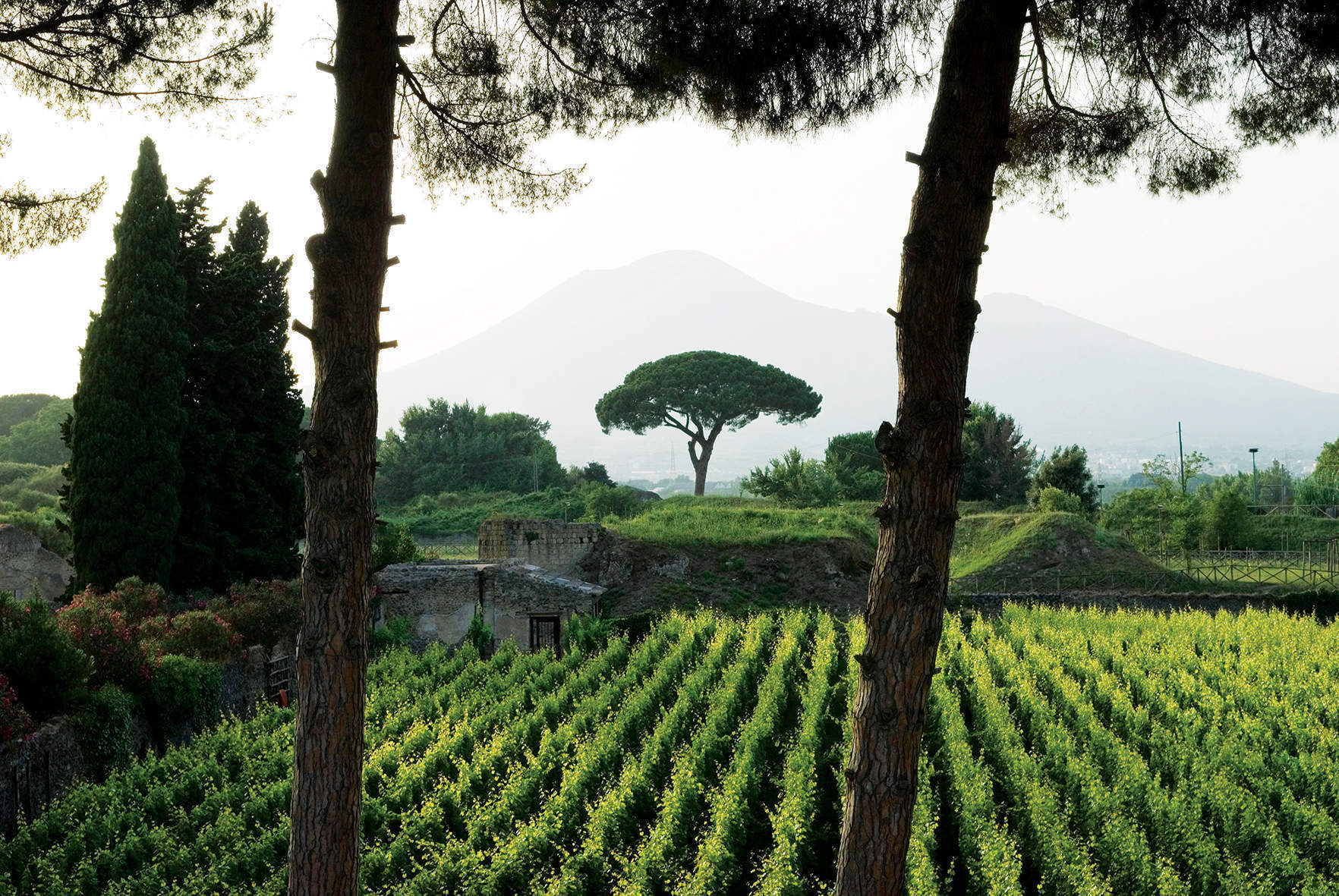 Sipping the wines that grew from molten lava