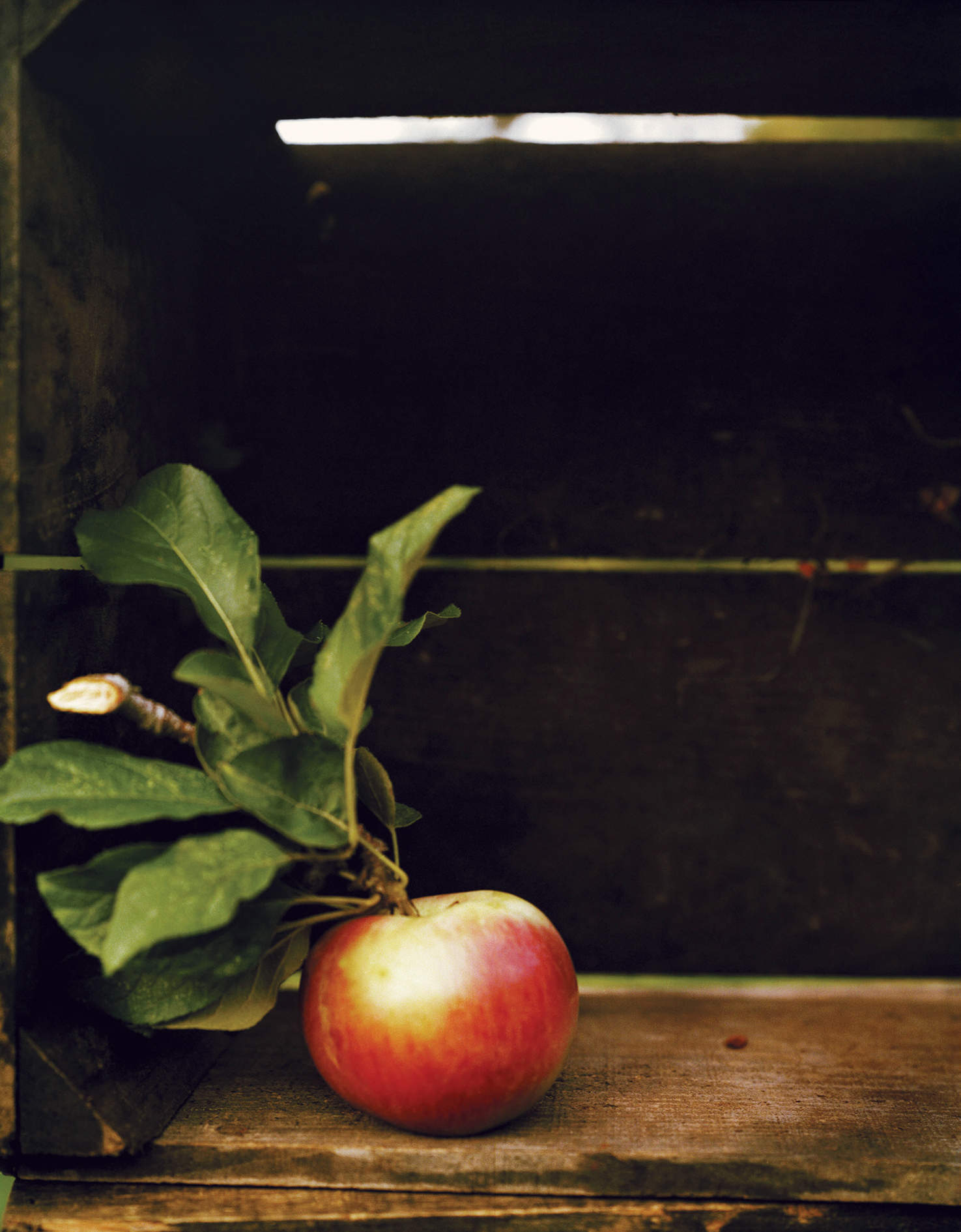 A bite of the apple: meet the man obsessed with our most English fruit
