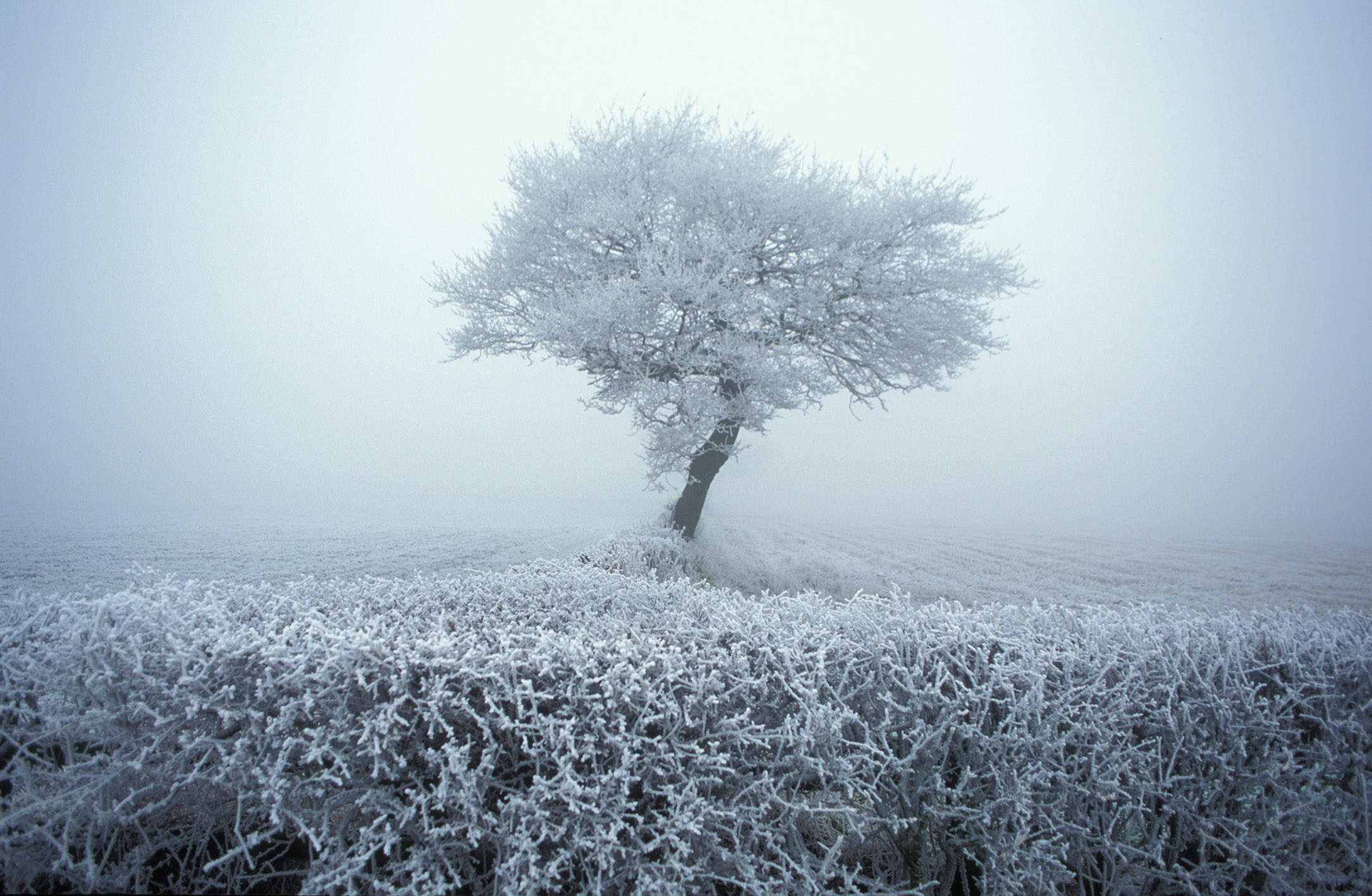 A time to break down, and a time to build: the beauty of midwinter