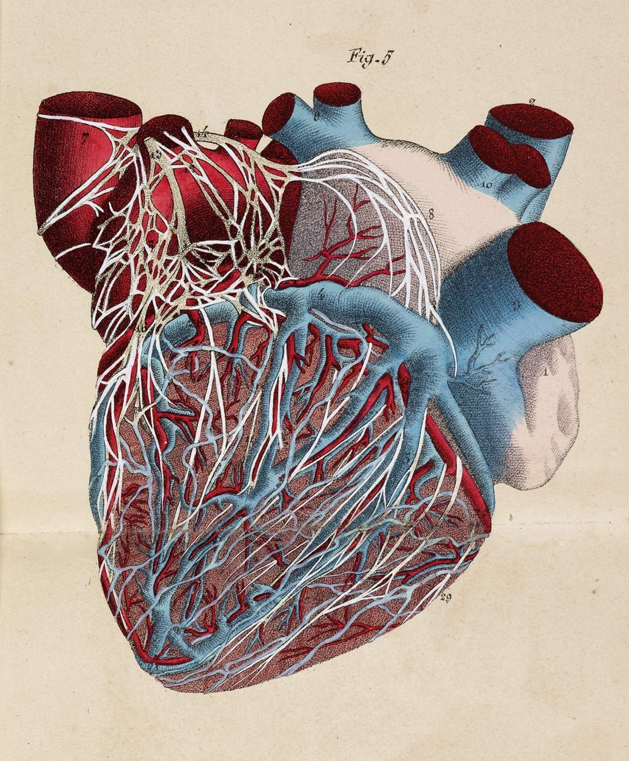 Pump action: the heart-stopping history of cardiac surgery
