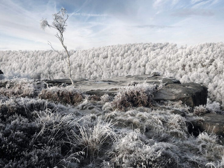 The bleak midwinter: when everything comes to a halt and even the mind stands fallow
