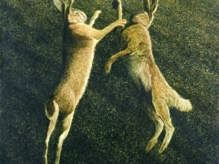 Hares are magical harbingers of spring when climate change has blurred the seasons