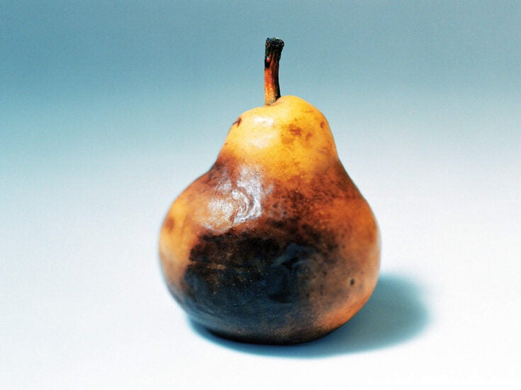 Don't sit and watch your fruit turn brown – get in early and wage war on the spores