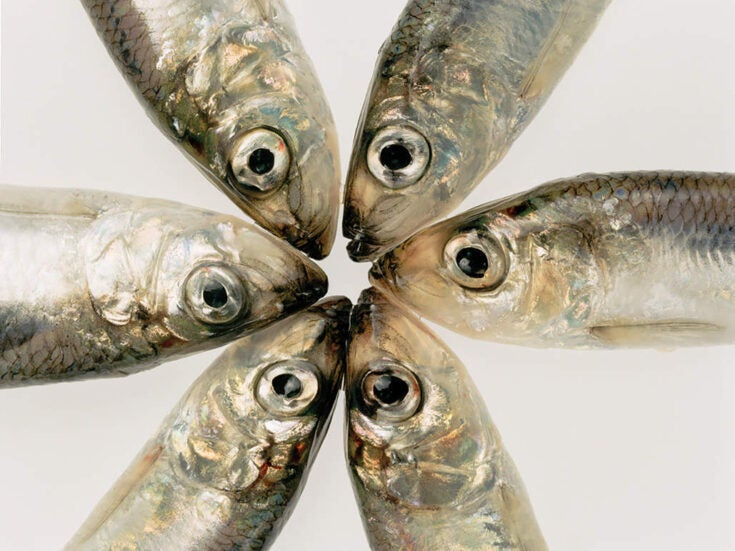 How five humble fish transformed the British Isles