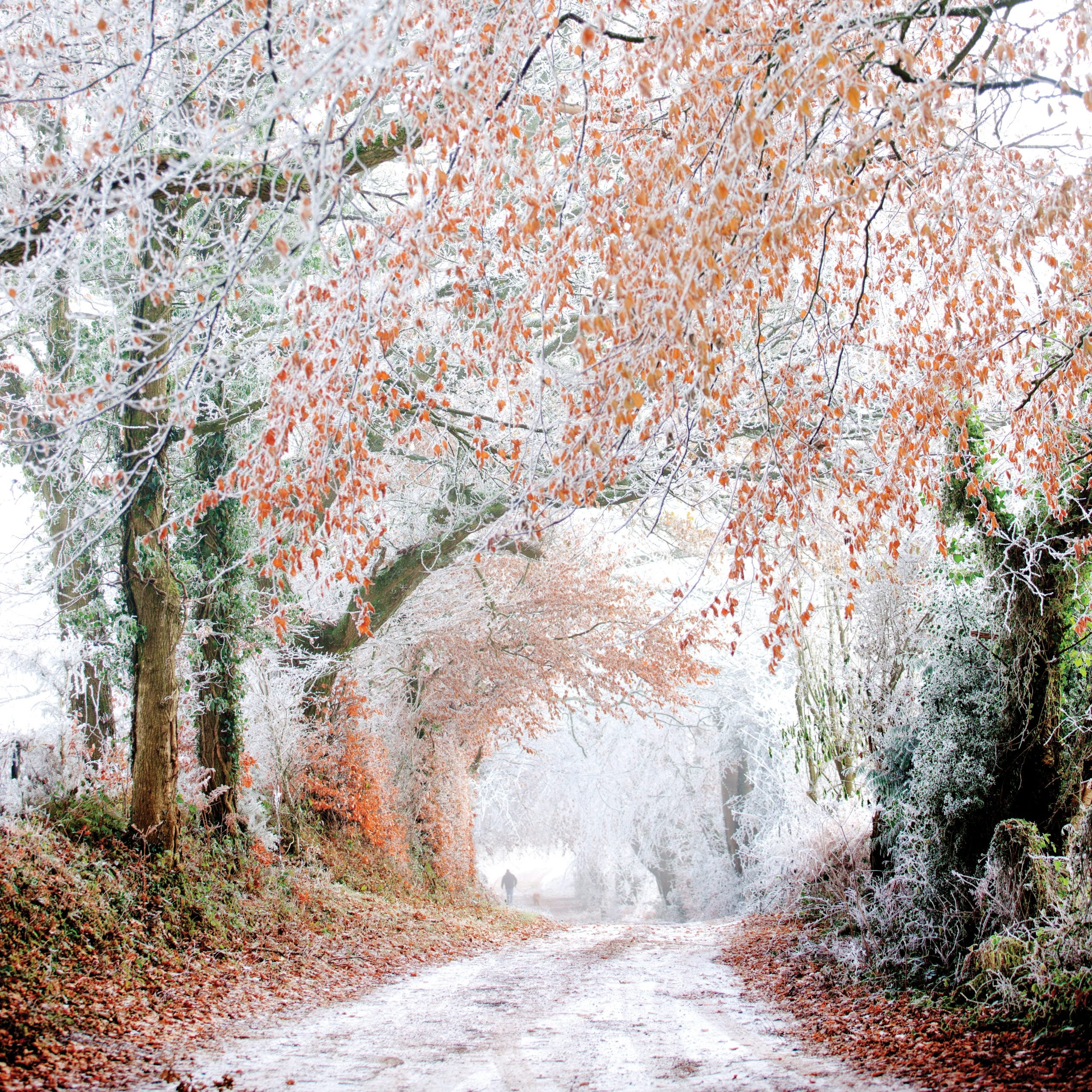 Time travel on a winter's woodland walk