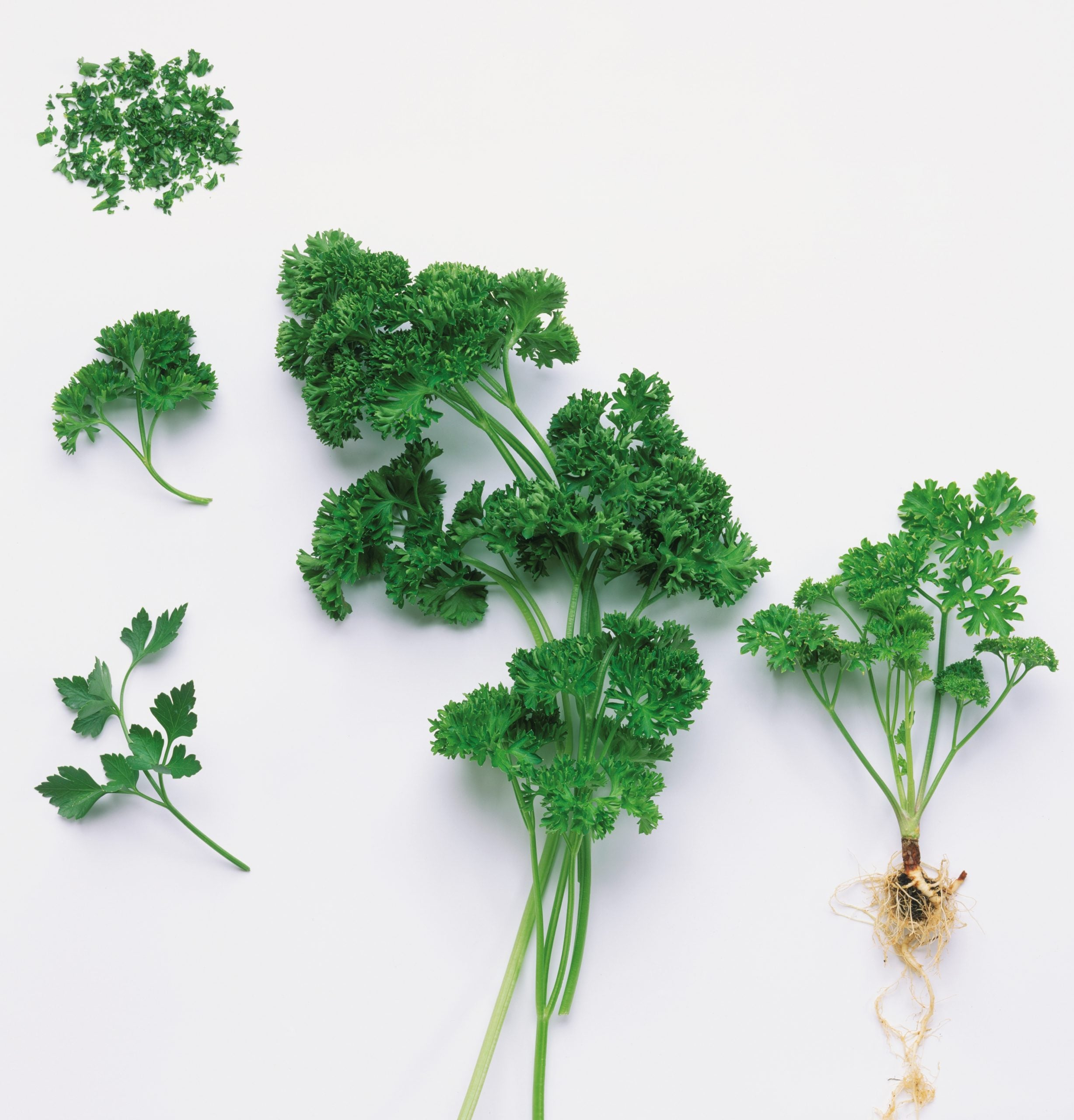 It's worrying that people buy up to 15 pots of supermarket parsley – it's so easy to grow at home