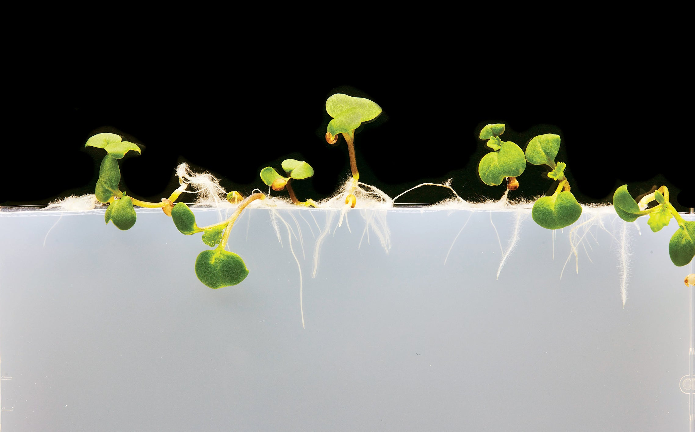 Watching seeds grow is nothing short of a miracle. So how do you ensure they have the best chance of survival?