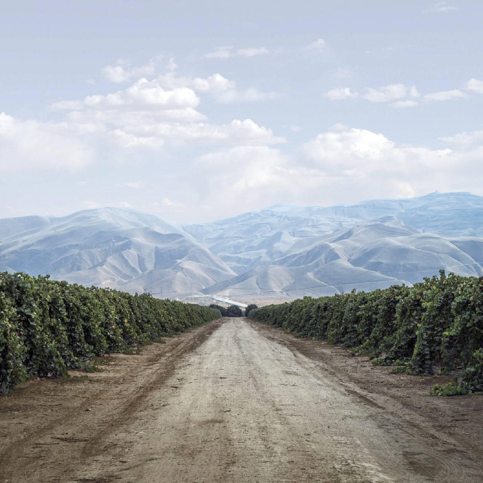Borders can't control grapes any more than they can control people – some of the best wines emerge when winemakers refuse to follow the rules