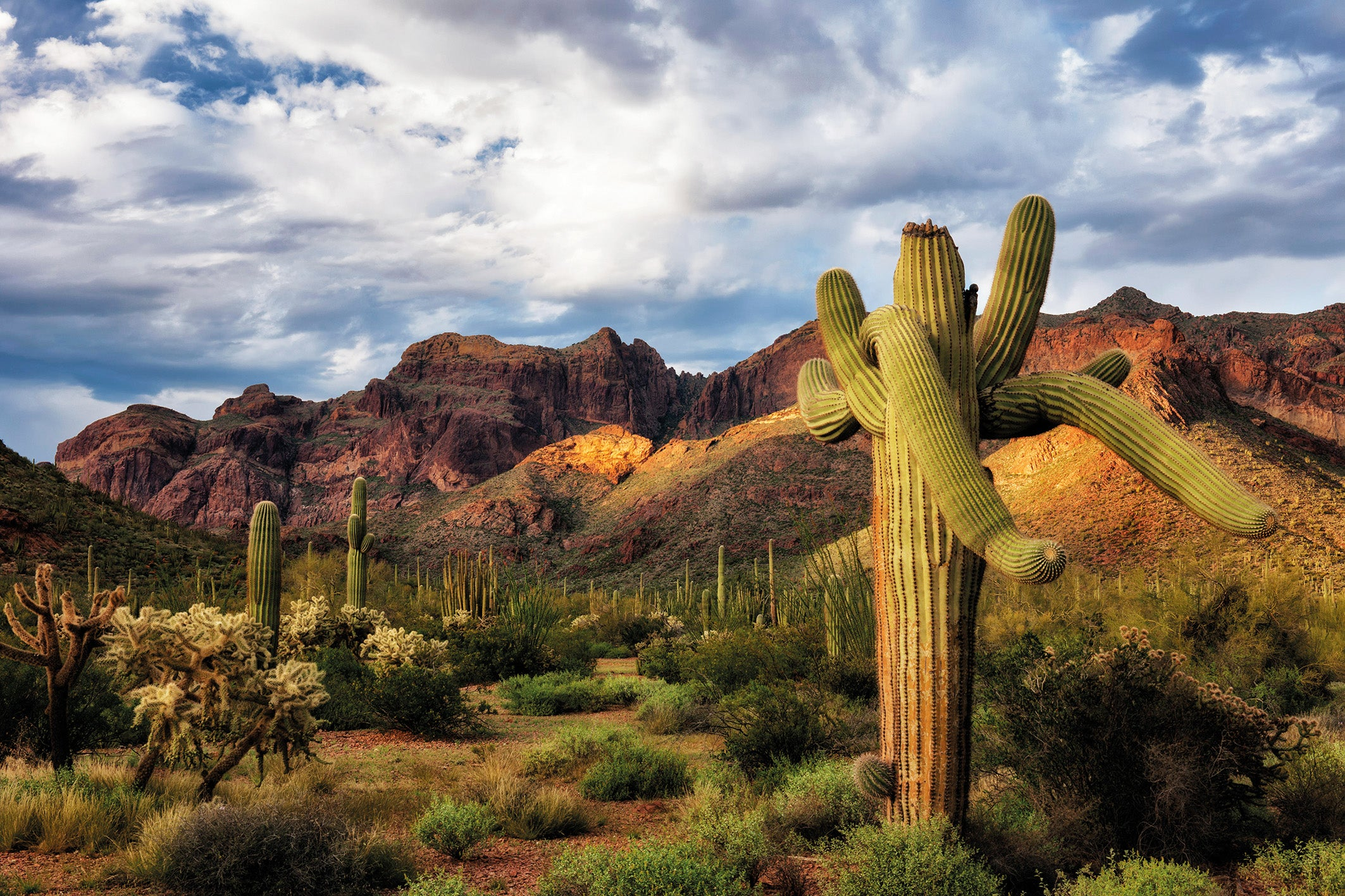 Arizona's Organ Pipe Cactus National Monument is beautiful and unique – and being irrevocably degraded in the name of Trump's wall