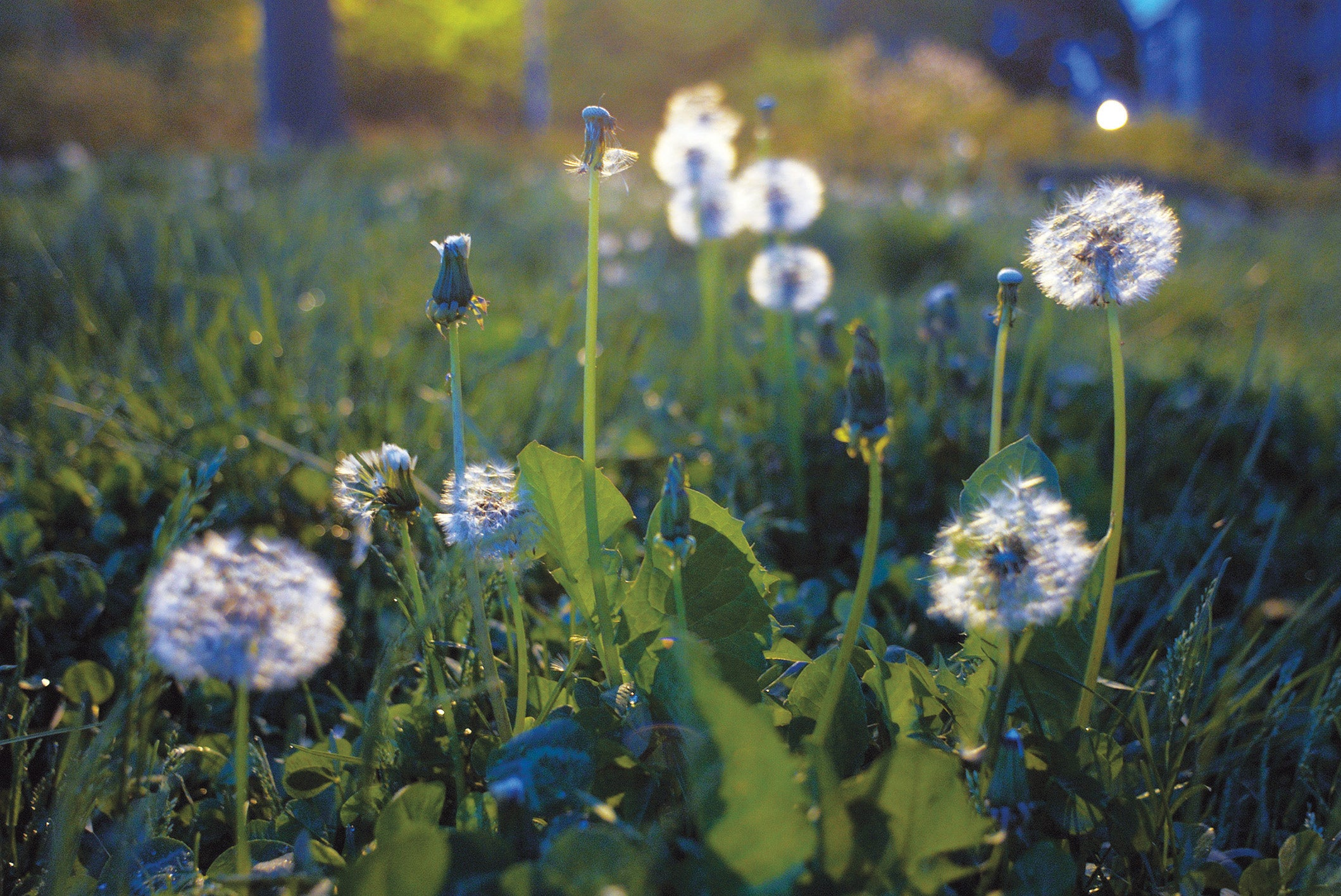 How should weeds be controlled in our green and sensitive age?