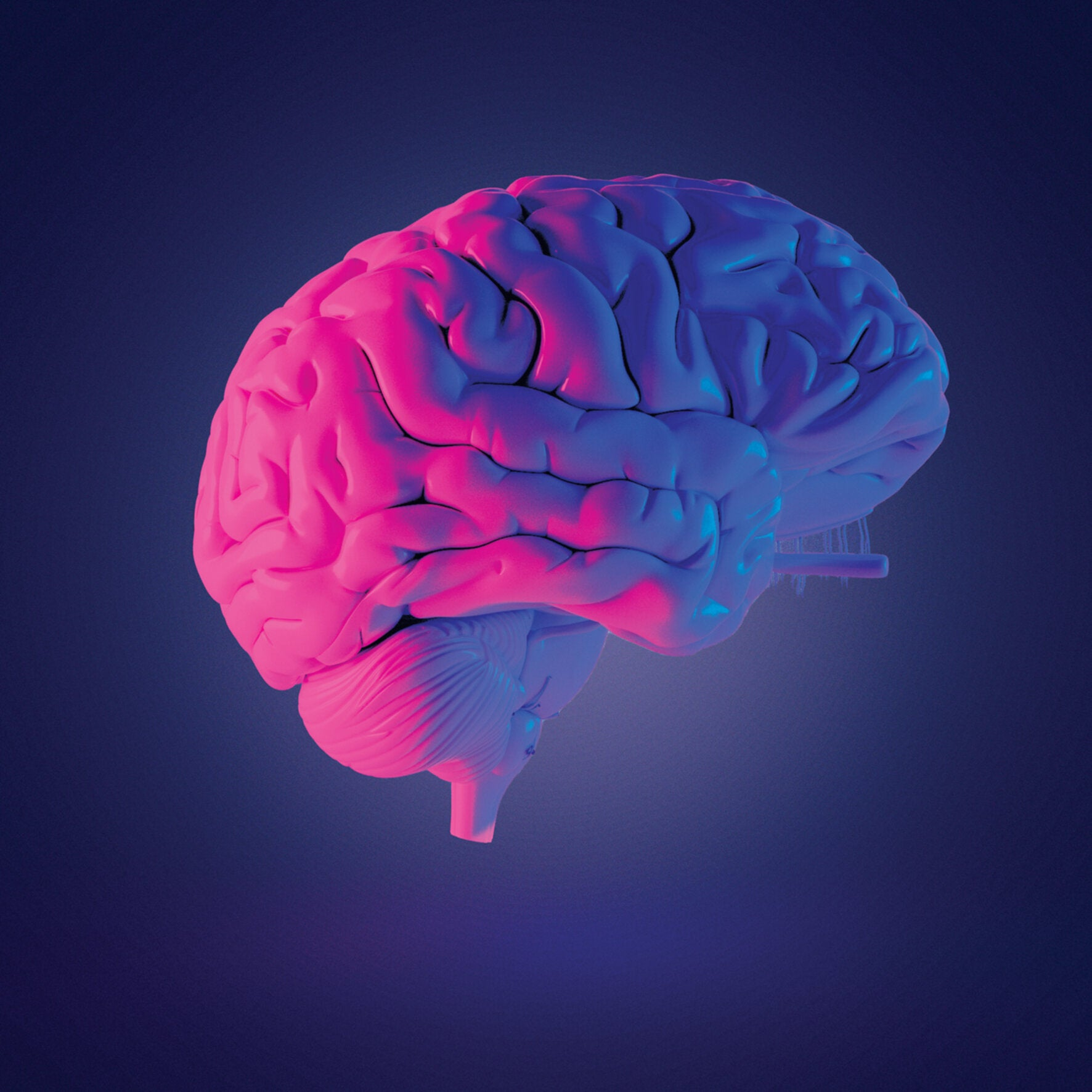 The mysteries of the brain