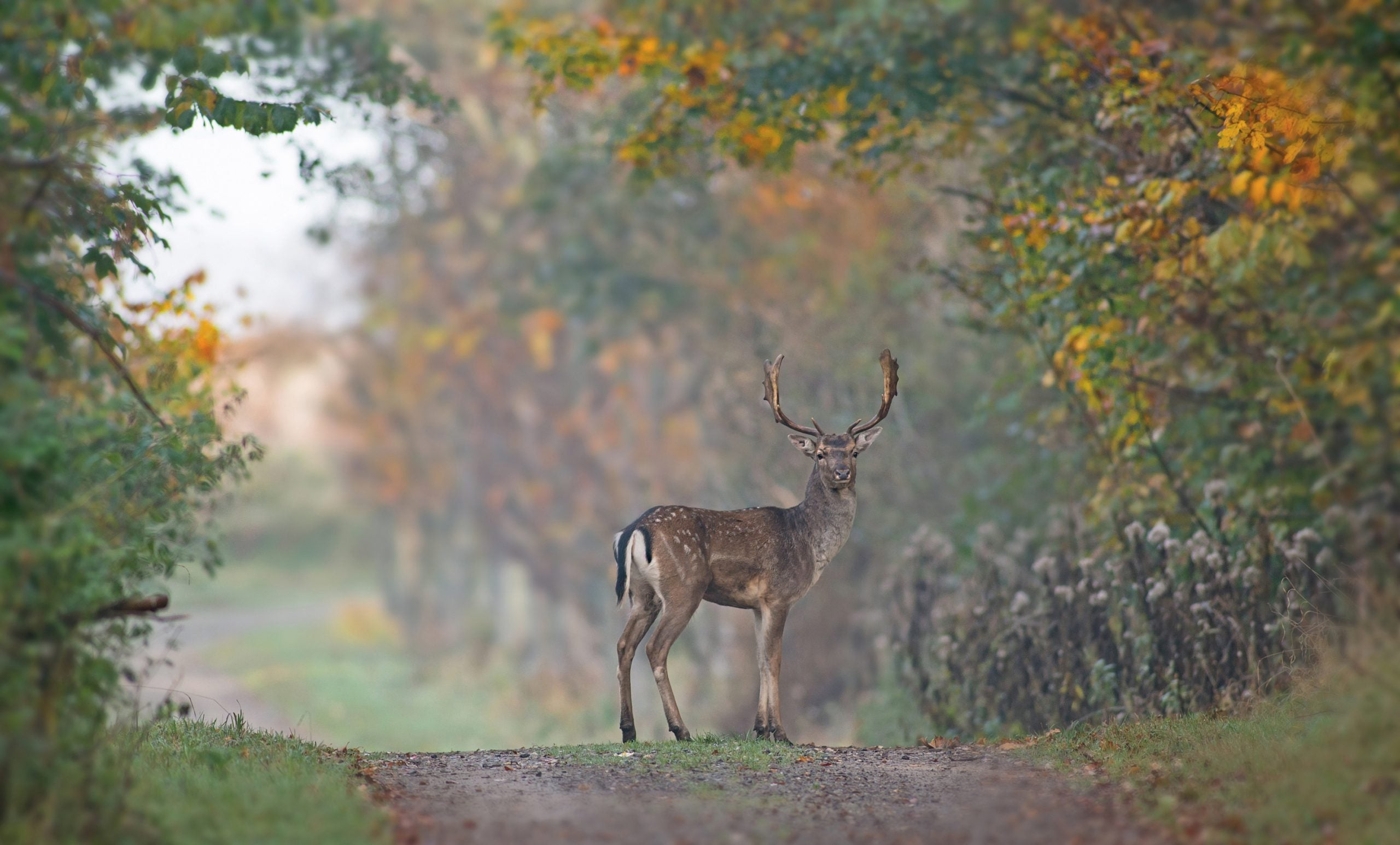 Watching the deer from my window, I realised there is a lesson to learn from the lockdown