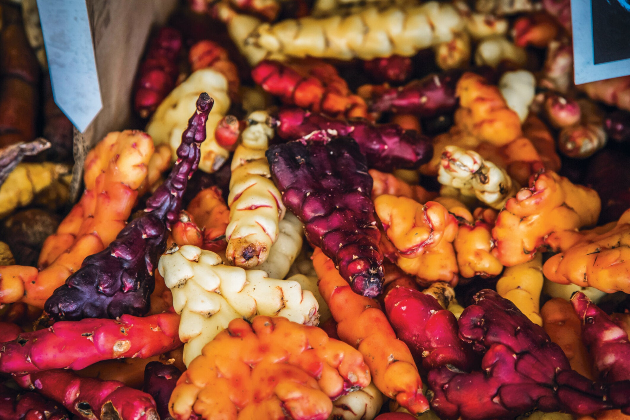 """Menus often boast of """"heritage"""" fruits and vegetables – but what does that actually mean?"""