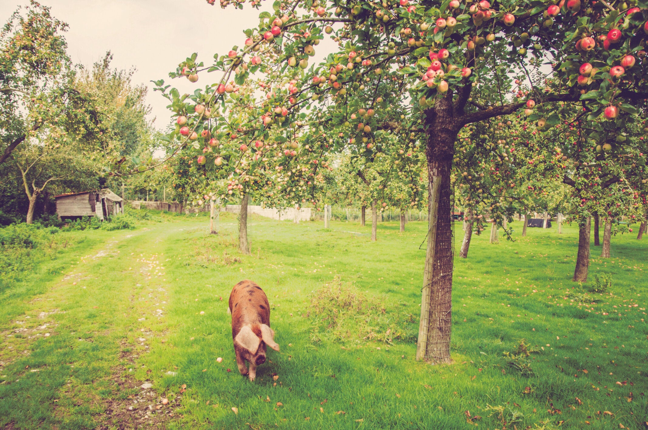 What Britain can learn from its disappearing orchards