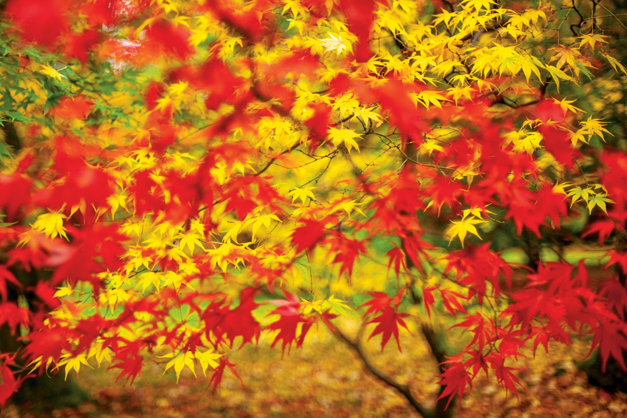 Pay attention to the colours of the leaves in your garden. They're not just a sign of the changing seasons