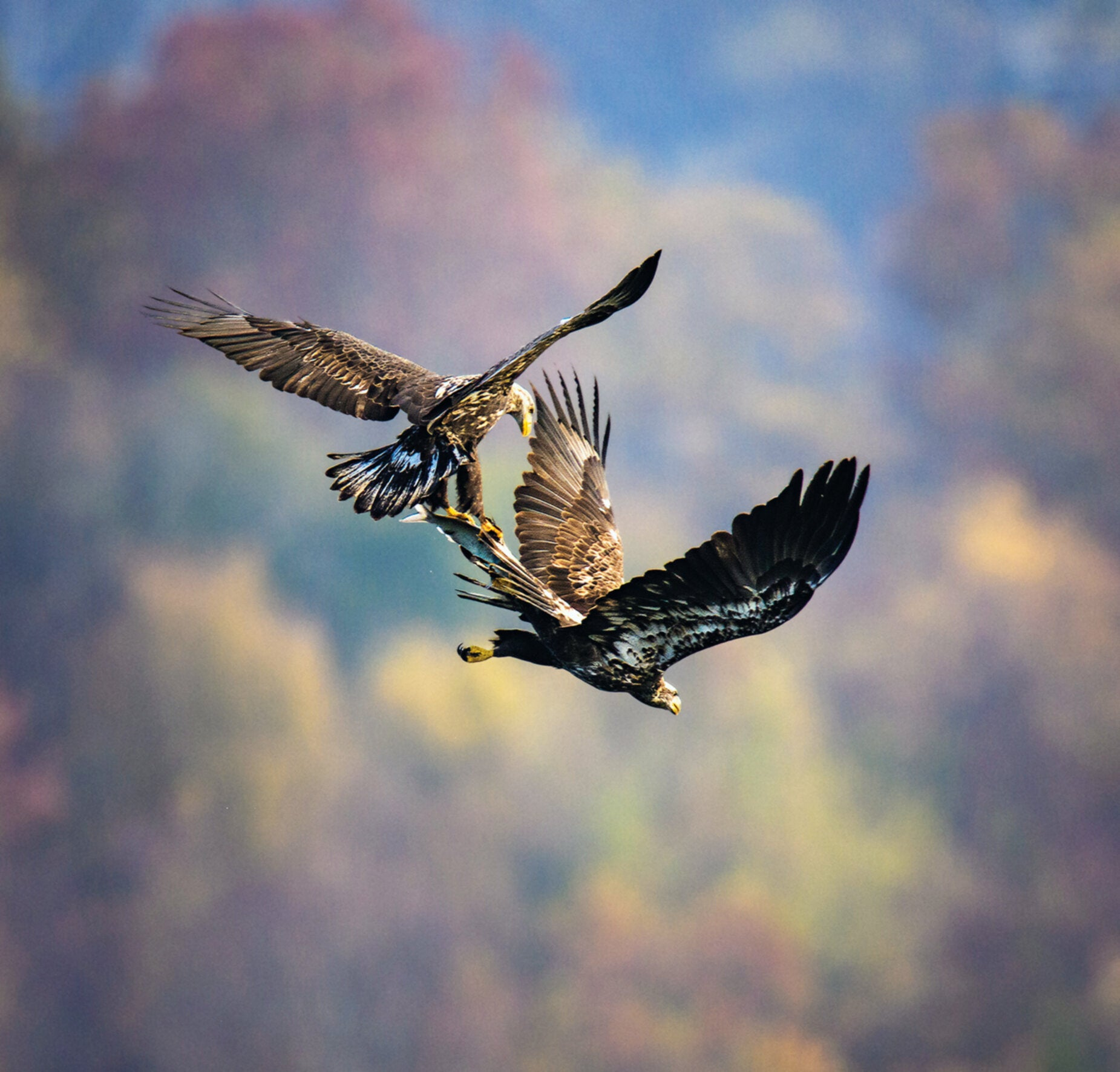 One of the most affecting sights in the natural world is watching birds of prey hunt