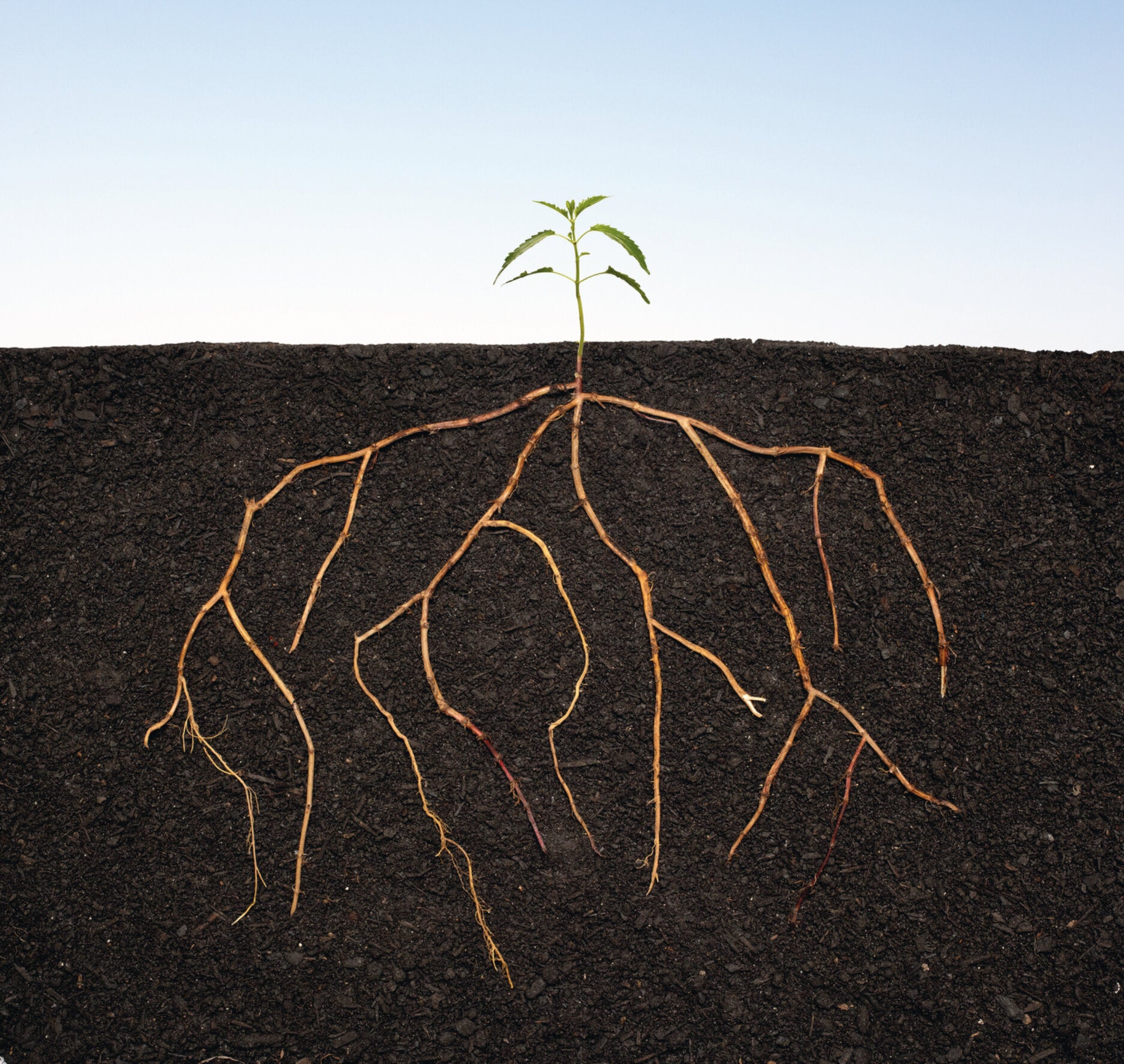"""Why a fine """"tilth"""" – though it may be hard to define – is essential for successful seed sowing"""