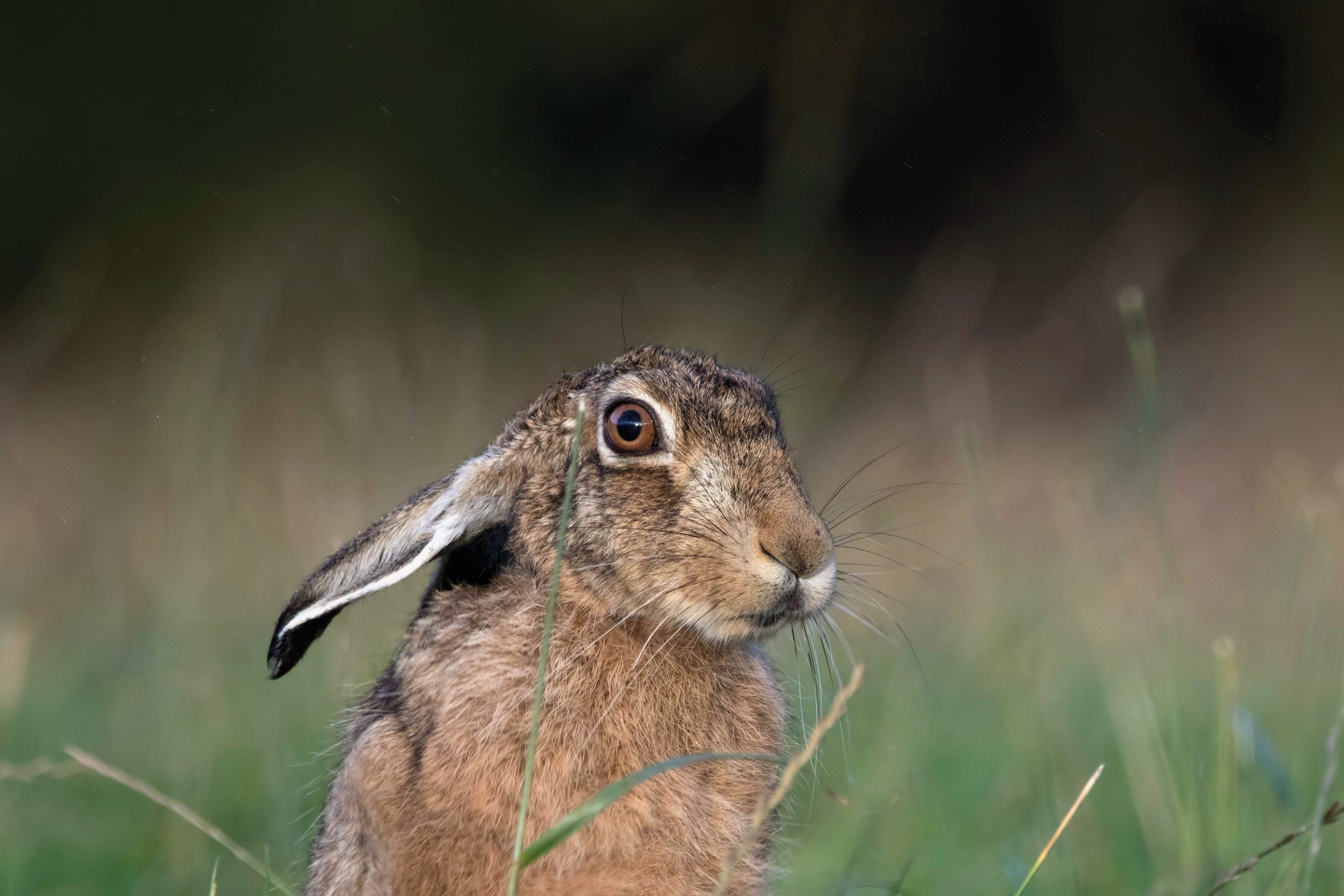 It is an ecological evil that hares are slaughtered by landowners seeking to protect their profits