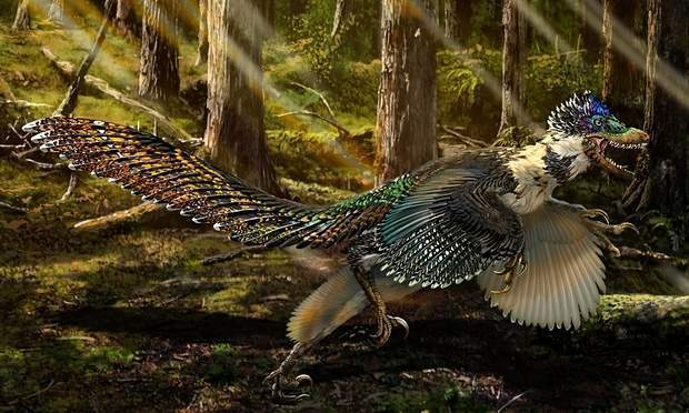 Researchers discover a big winged dinosaur so big it probably couldn't fly