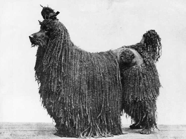 The day I treated H G Wells's poodle (without the need for a time machine)
