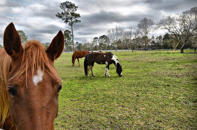 Three years after the horsemeat scandal, are we any closer to knowing what we're eating?