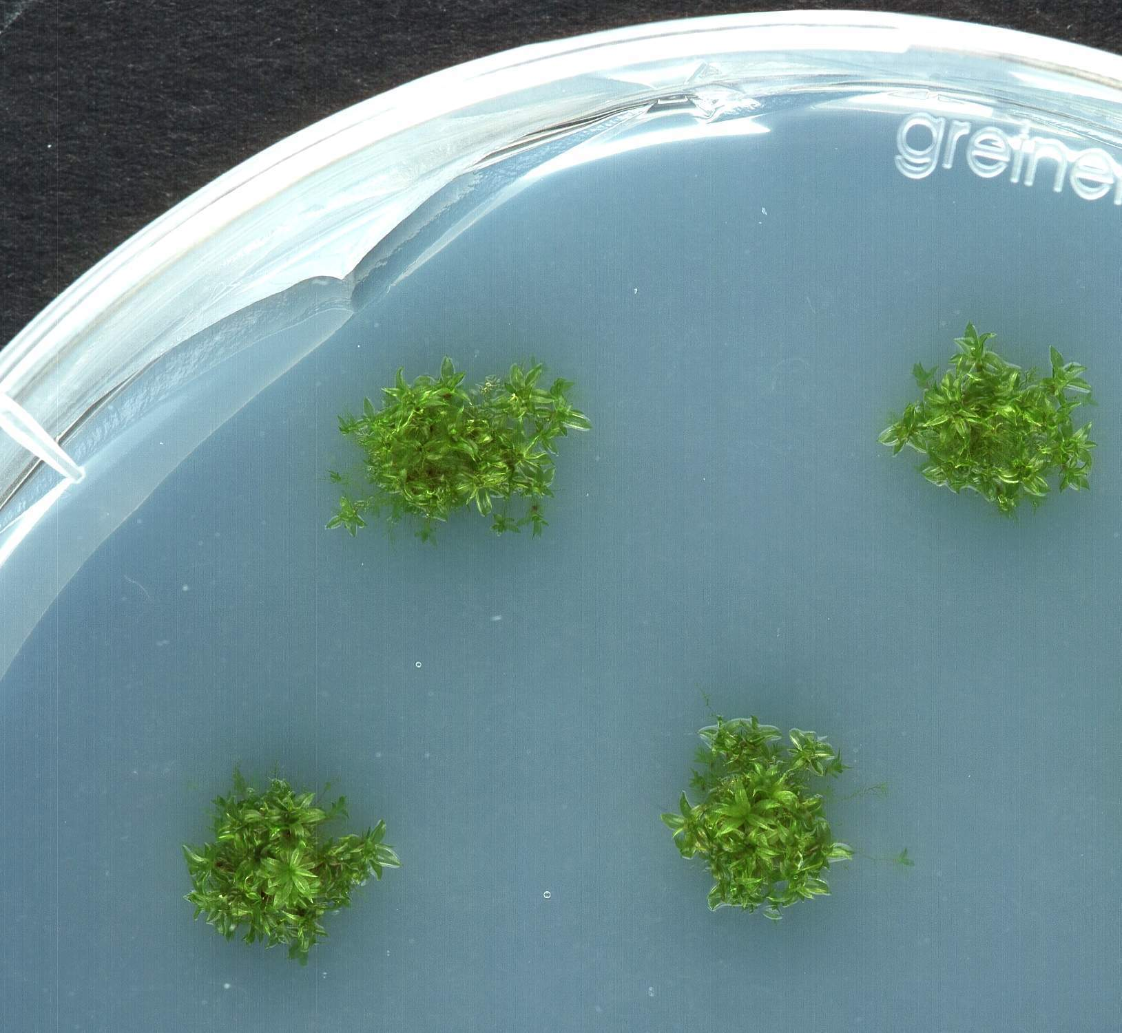 Seaweed, helium and human blood - Christmas gifts for the scientist in your life