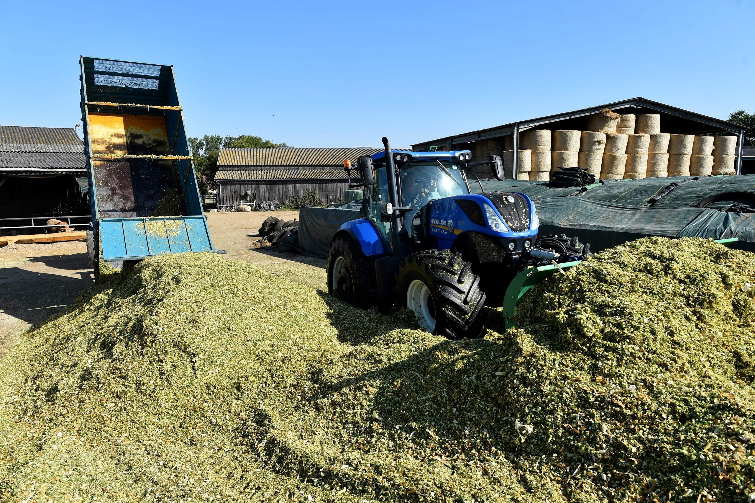 I love it when the silage truck arrives – and I've finally worked out why the sheep like it, too