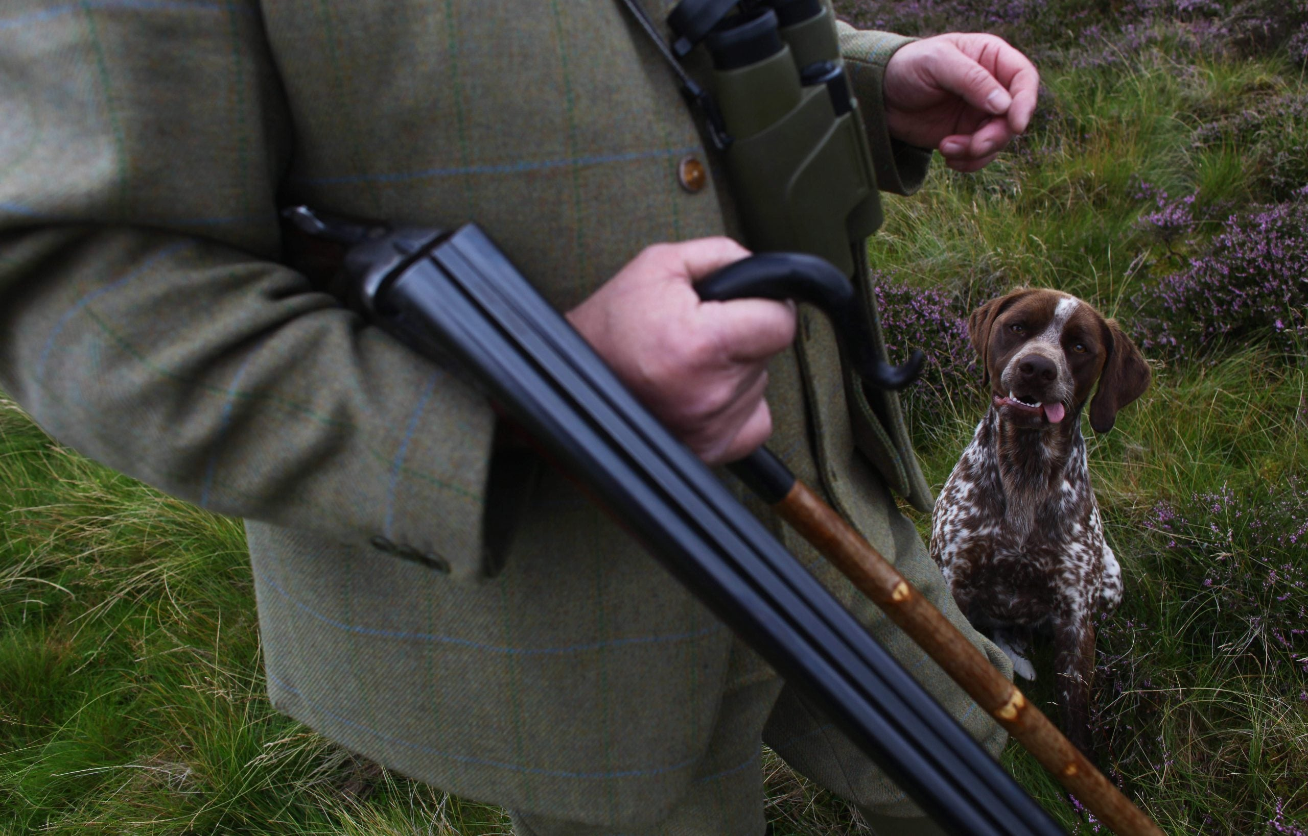 """Tail docking is described as """"barbaric"""" – so why did the SNP vote to bring it back?"""