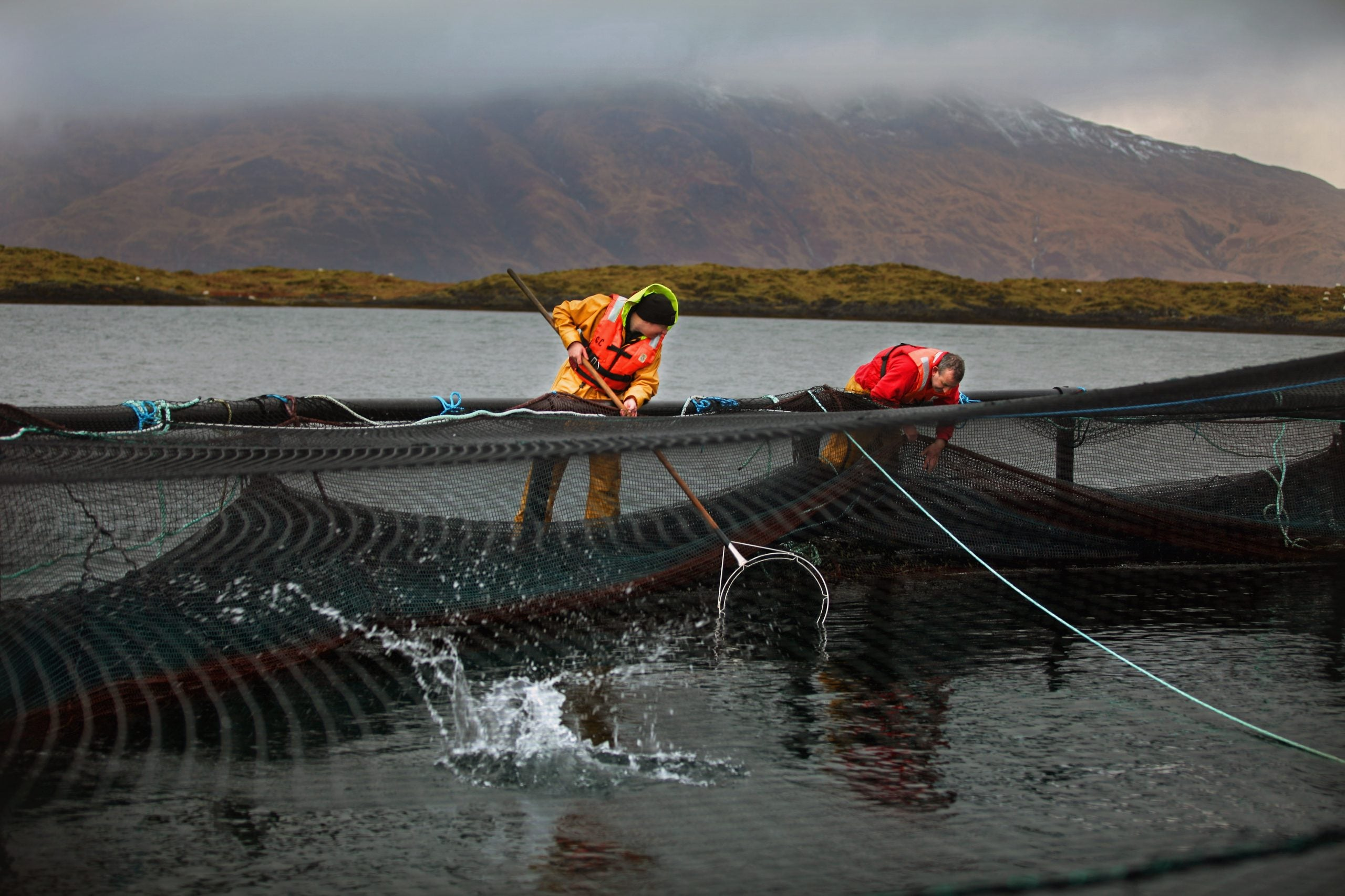 How a new kind of fish farming could save the UK's wild salmon