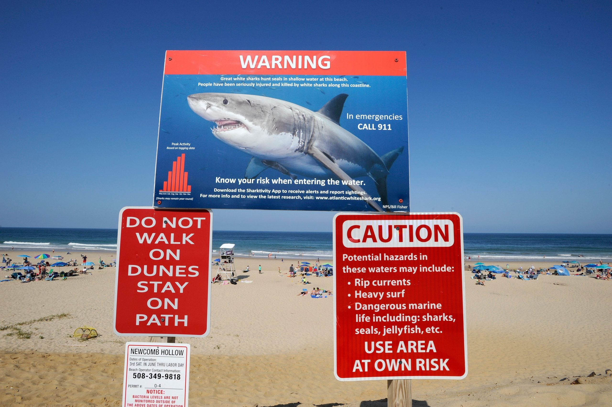 How shark attacks are pitting US conservatives against liberals