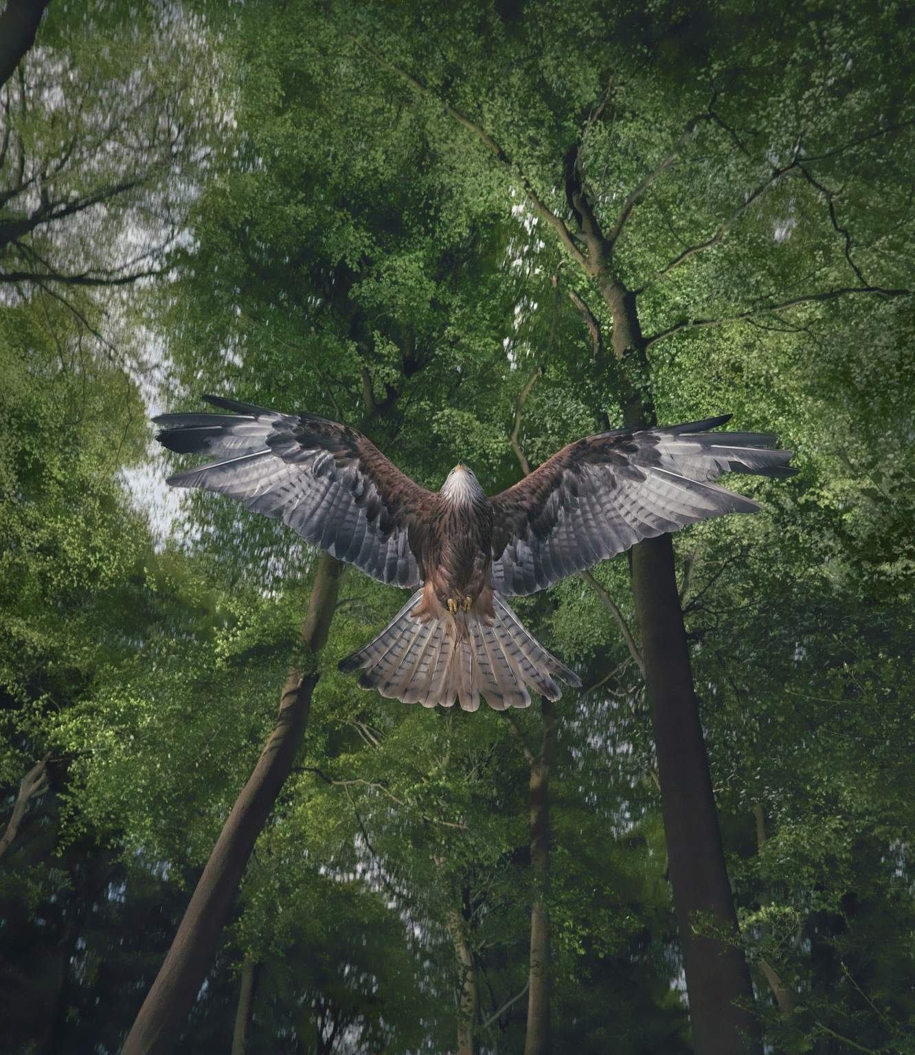 Unfair game: why are Britain's birds of prey being killed?