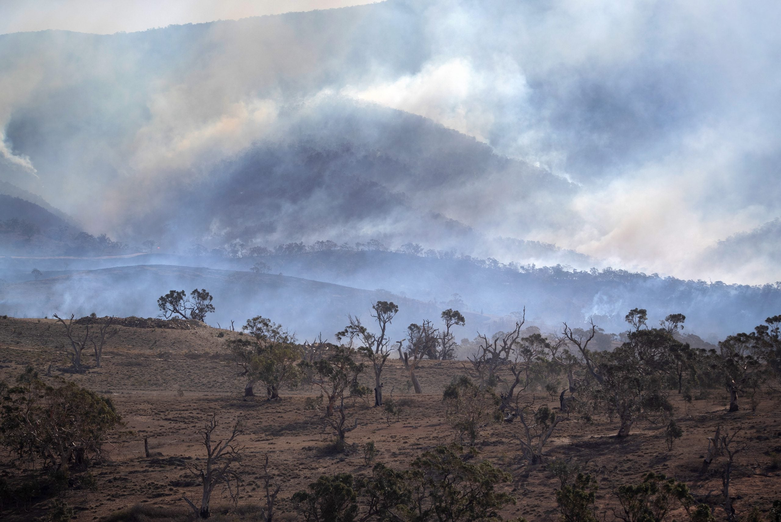 From the NS archive: The bush fire