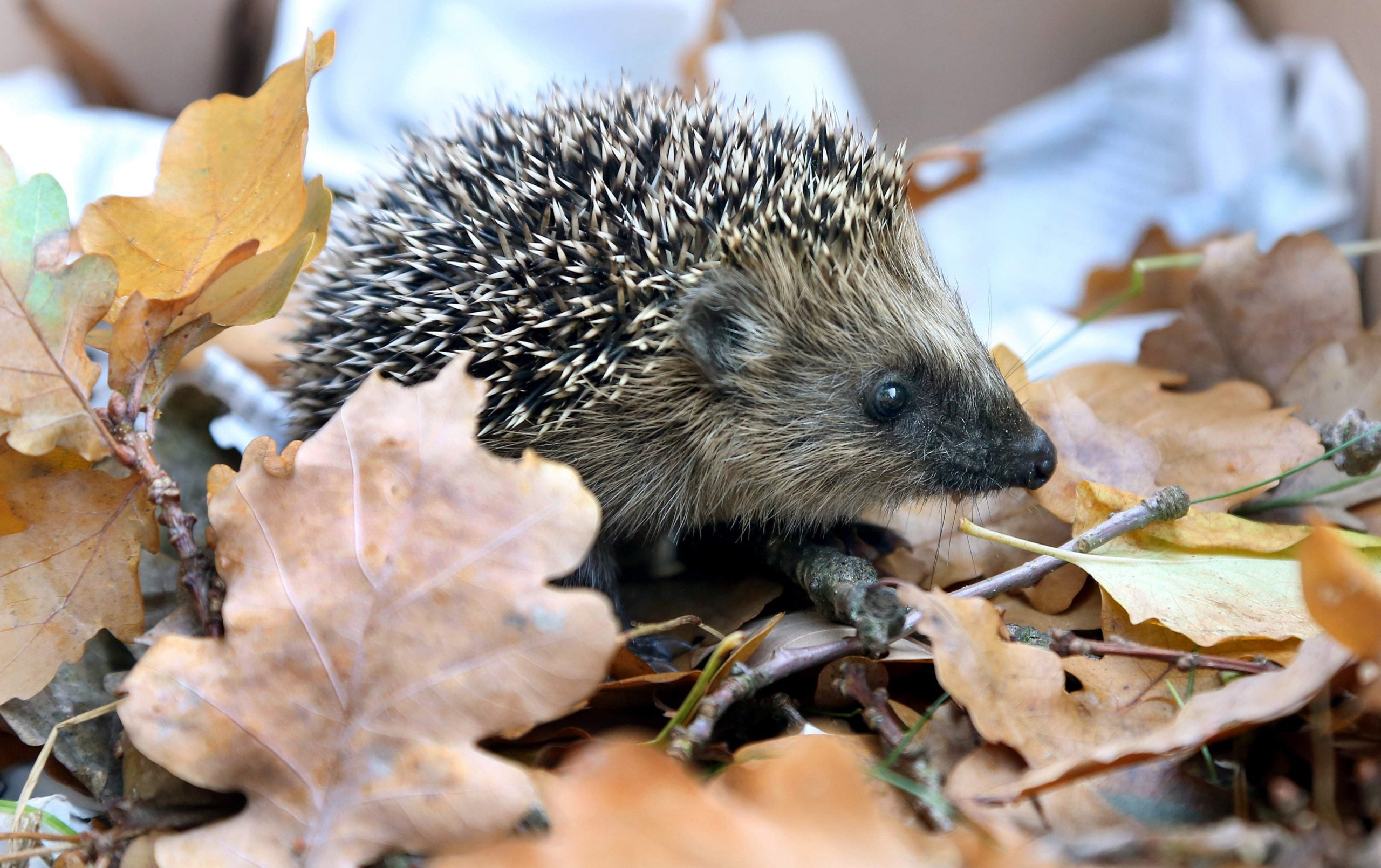 My bike ride to Kolkata, Corbyn's position on HS2, and the plight of the metropolitan hedgehog