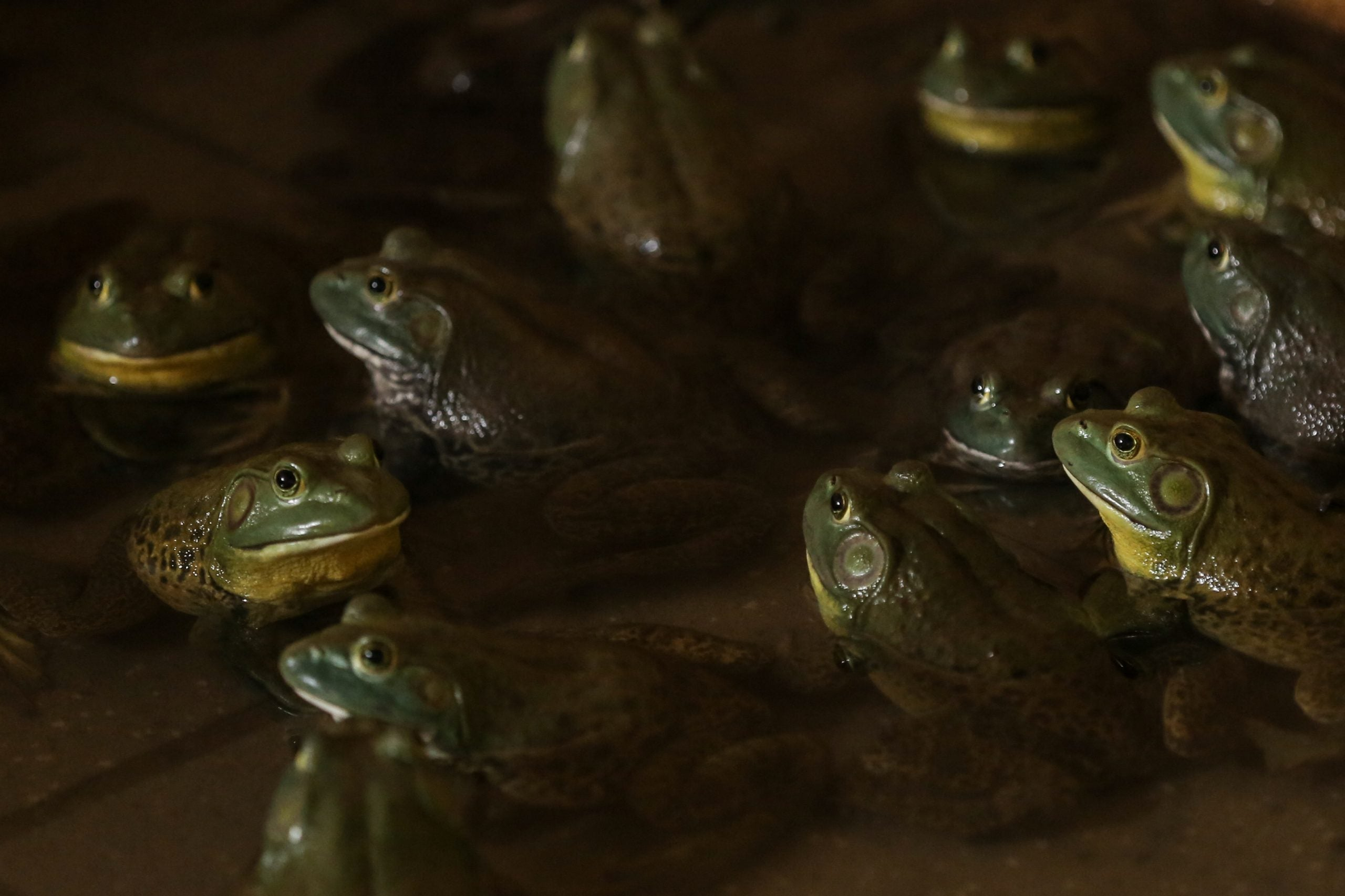 We are all frogs in a pan of water, and coronavirus reminds us that it is heating up dangerously