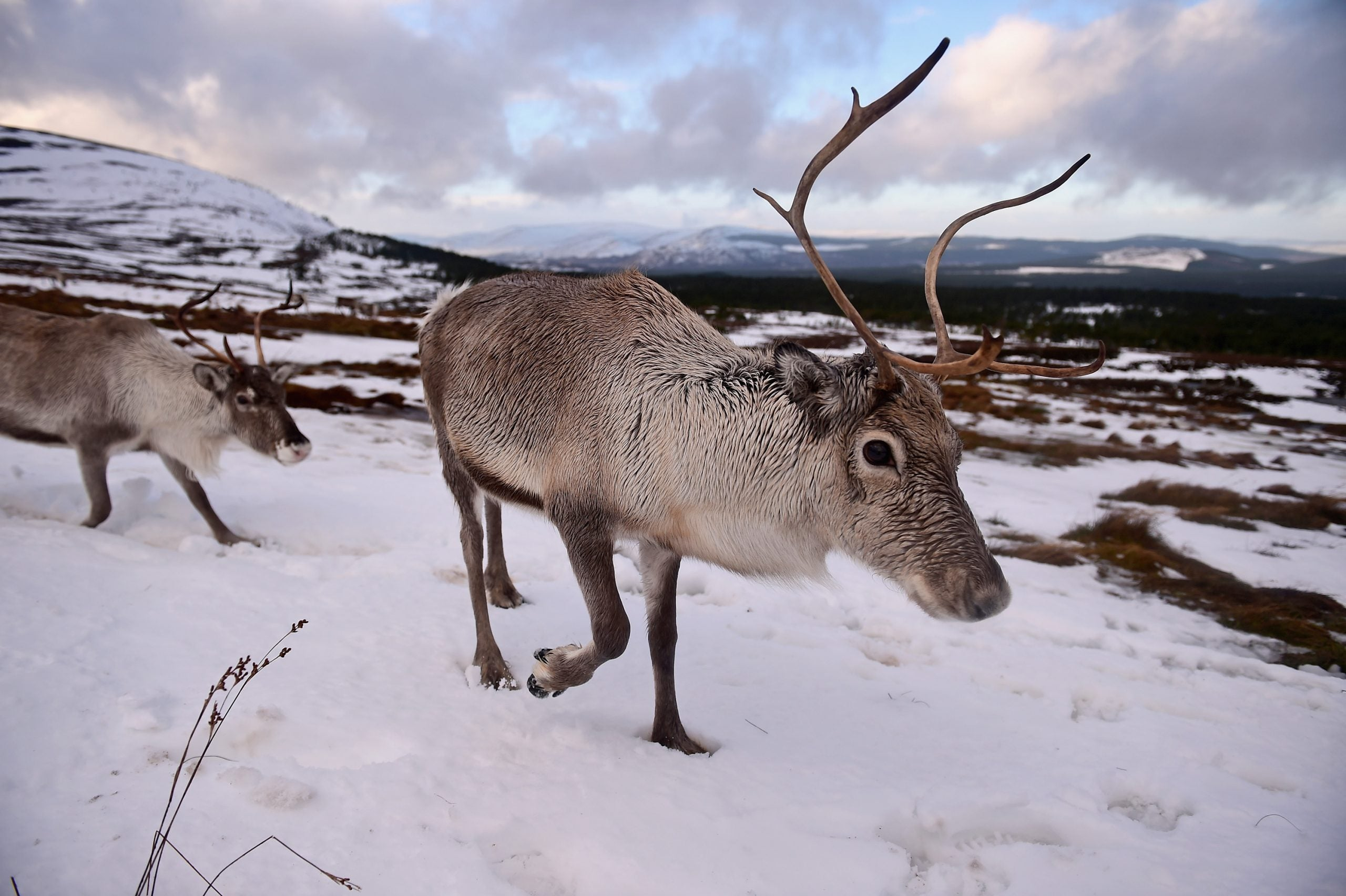 Subscriber of the week: Rudolph