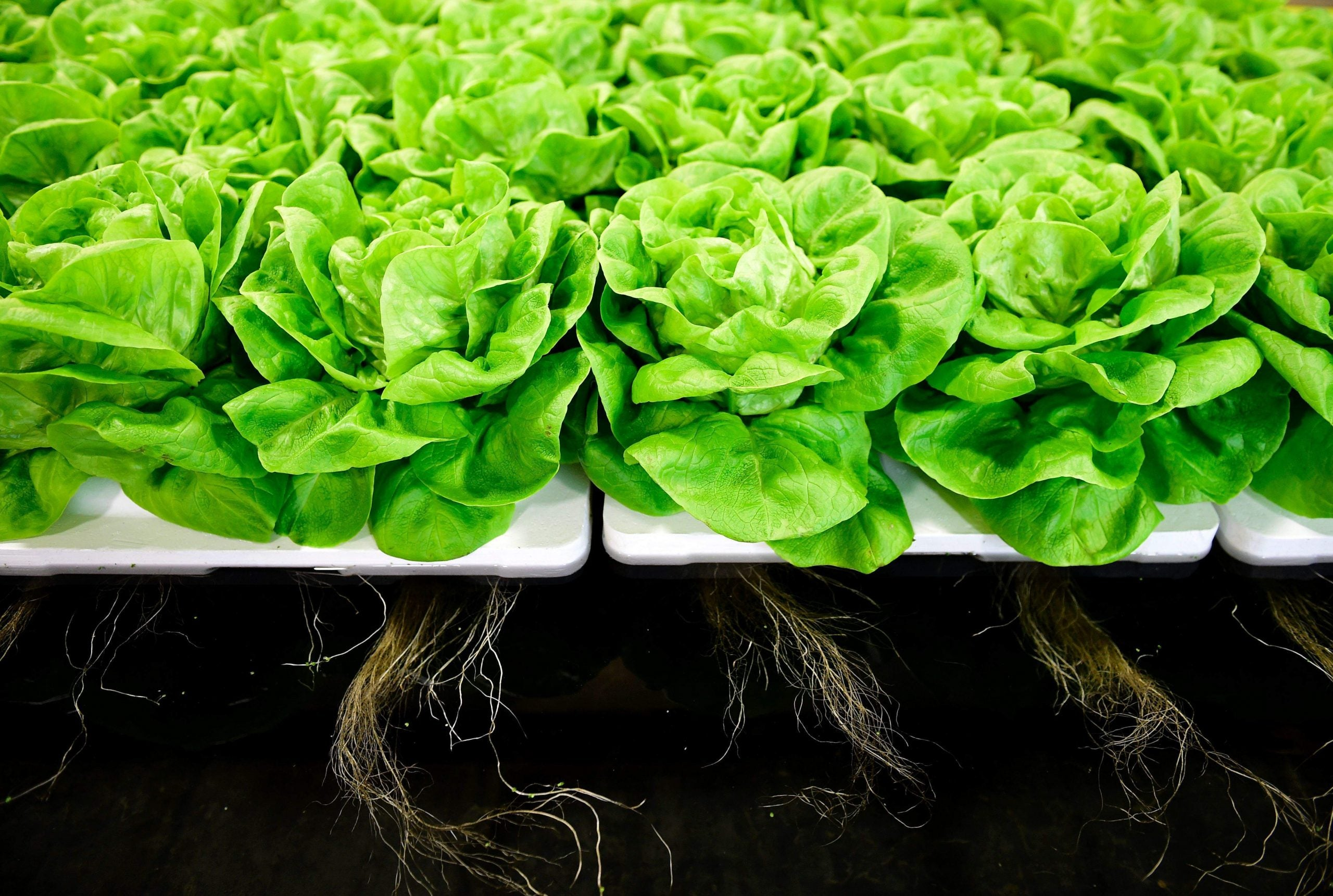 Why we'll all have to stomach the hi-tech future of food