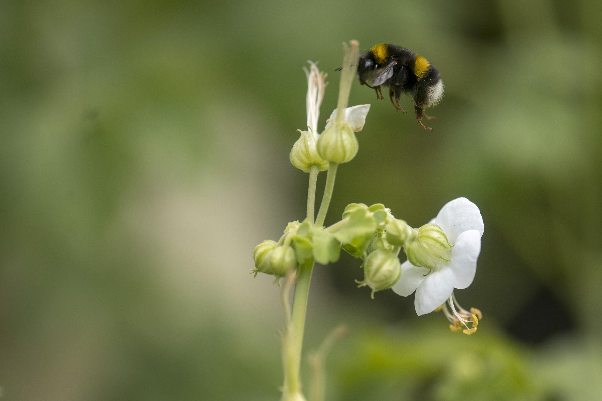 Forget the music – I think the bee tweet is what I'm going to be remembered for
