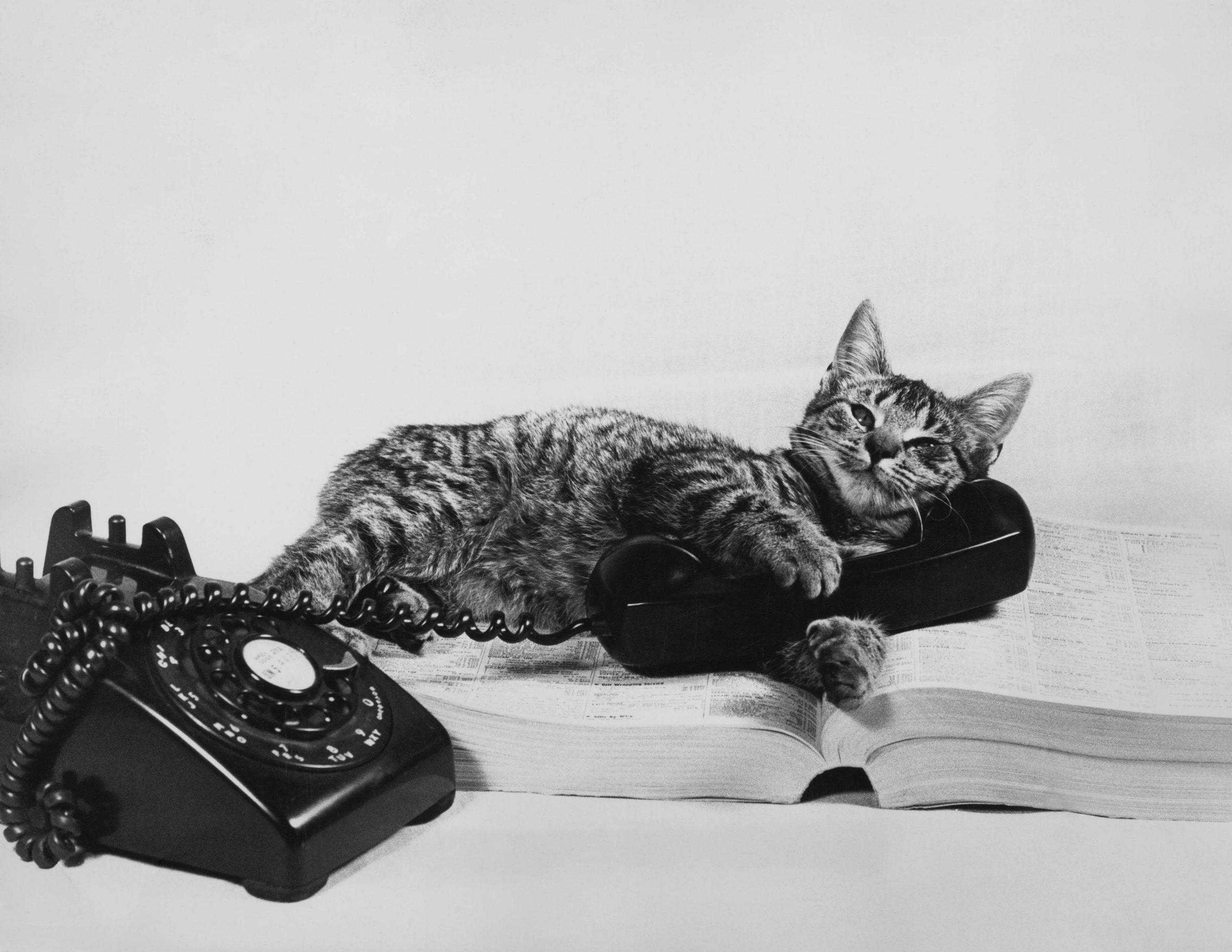 What cats can teach us about how to live