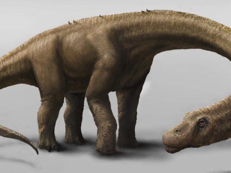 Newly-discovered dinosaur is the biggest land animal found so far