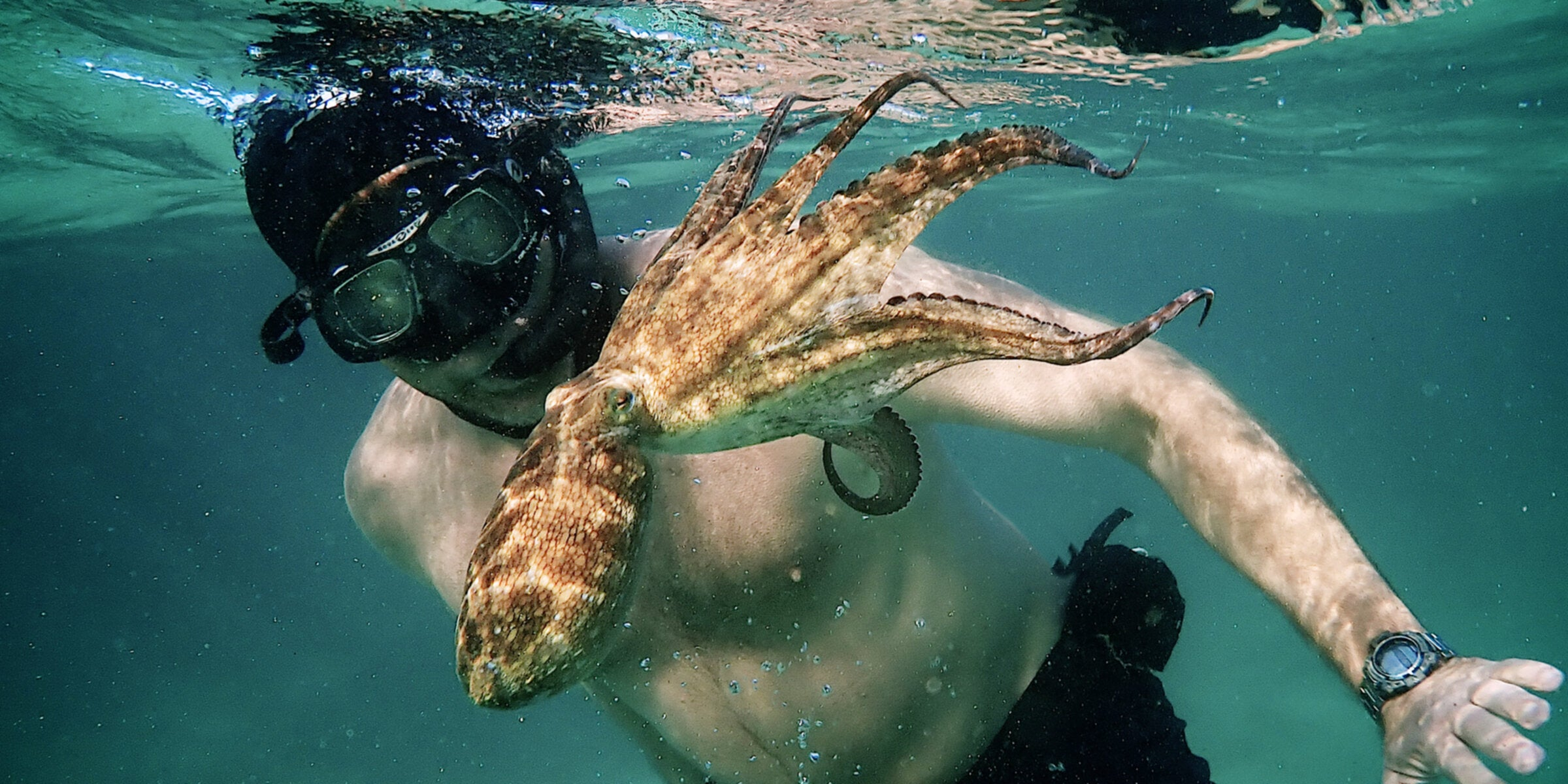 Watching Netflix's My Octopus Teacher, I wonder why we like to imagine animals are our friends