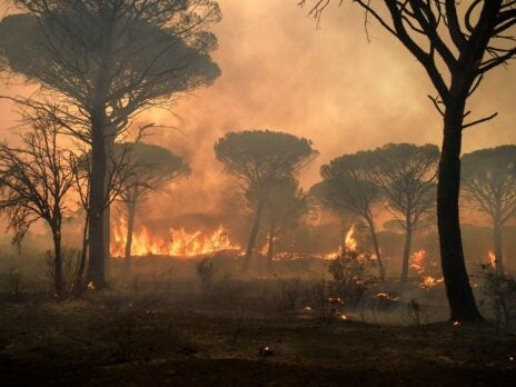 I was on holiday in a French farmhouse with vineyards all around when the fire came for me
