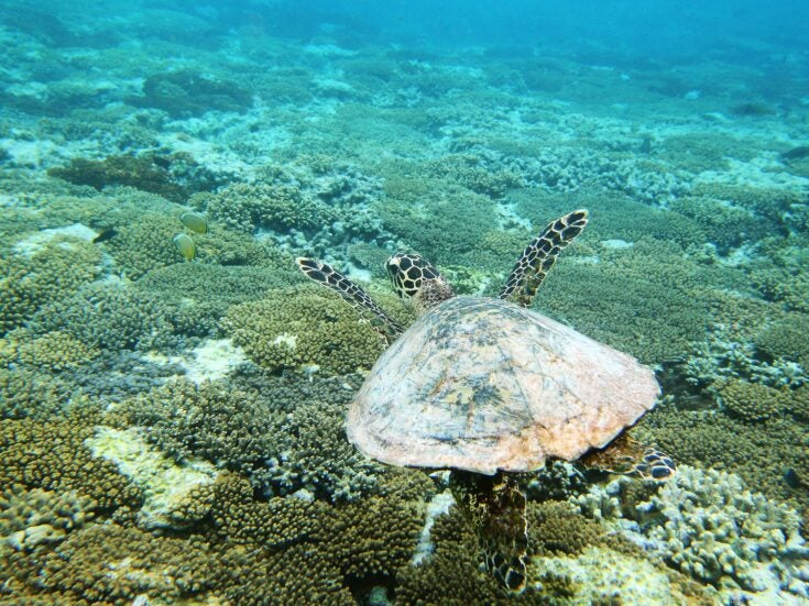 Misplaced outrage and the Great Barrier Reef