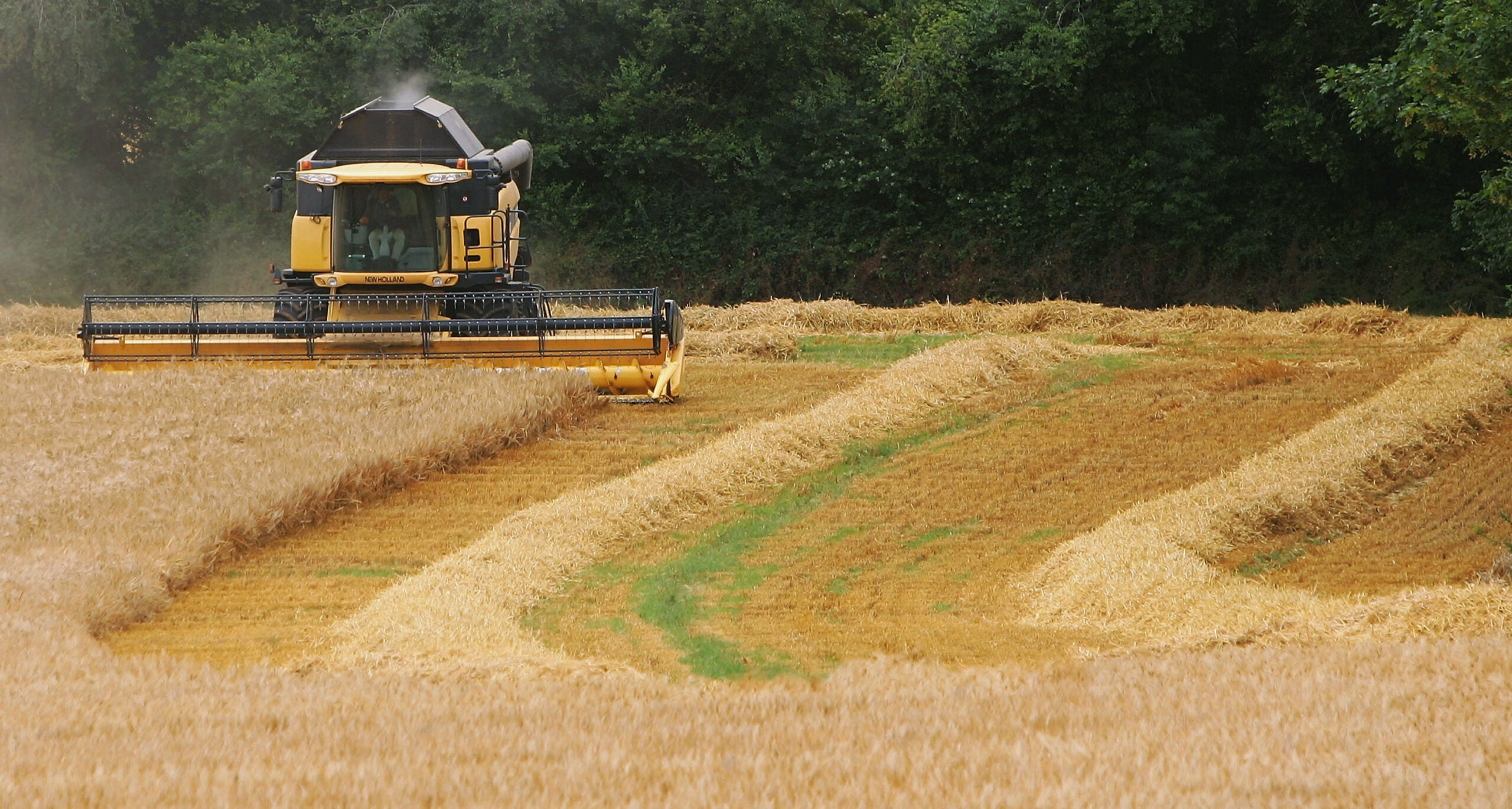 Liz Truss's trade deals will destroy British farming as we know it